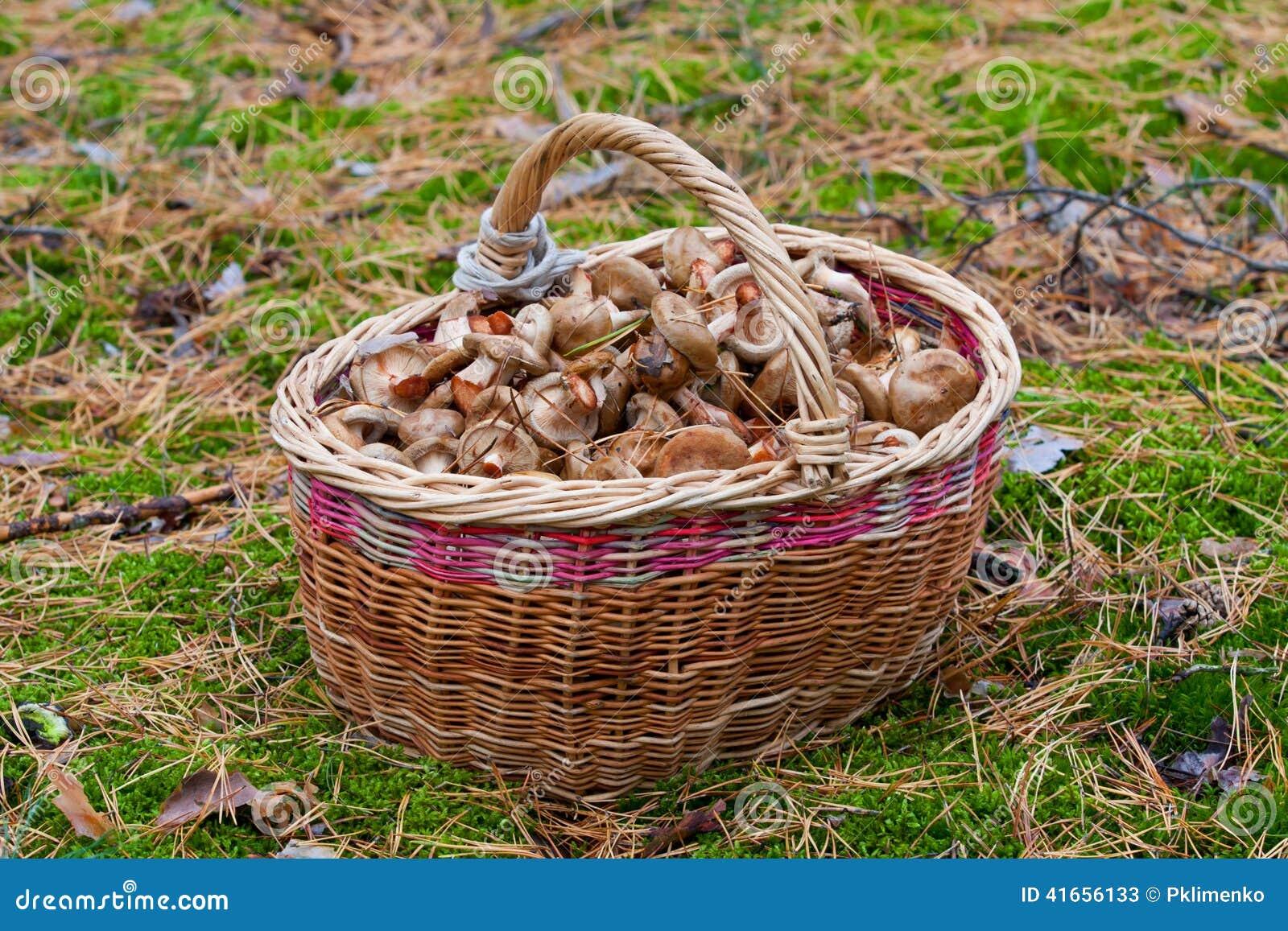Корзина грибов в пуще