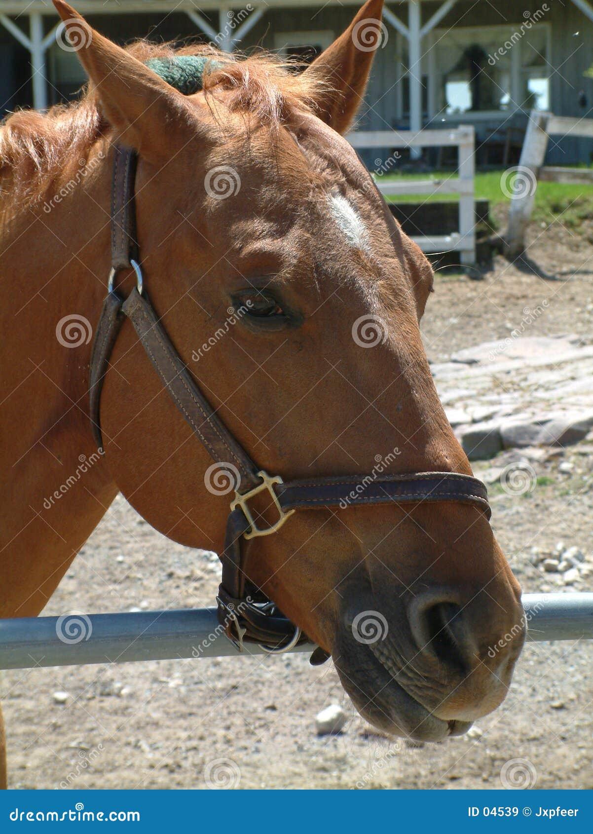 коричневая лошадь