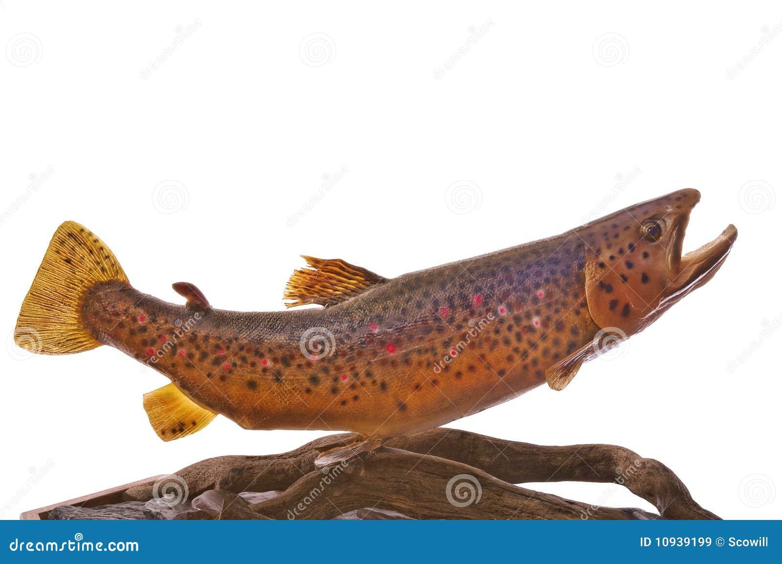 коричневая немецкая форель