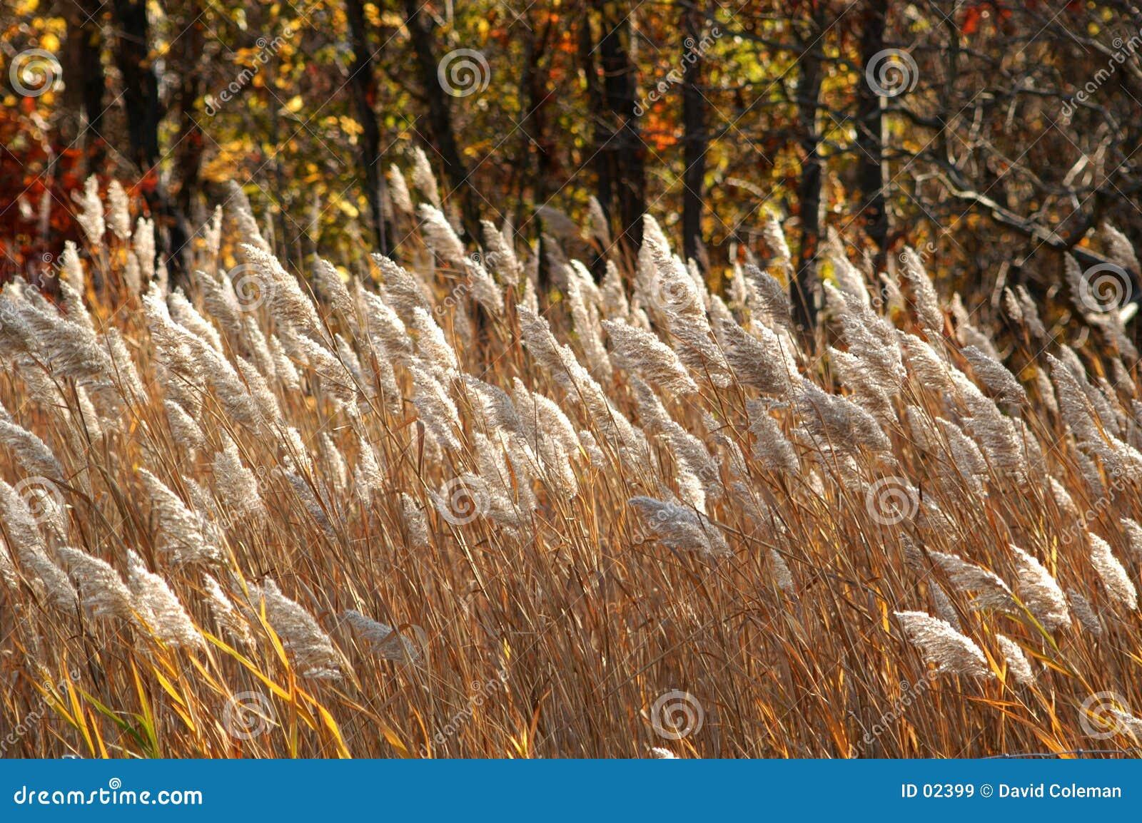 коричневые травы