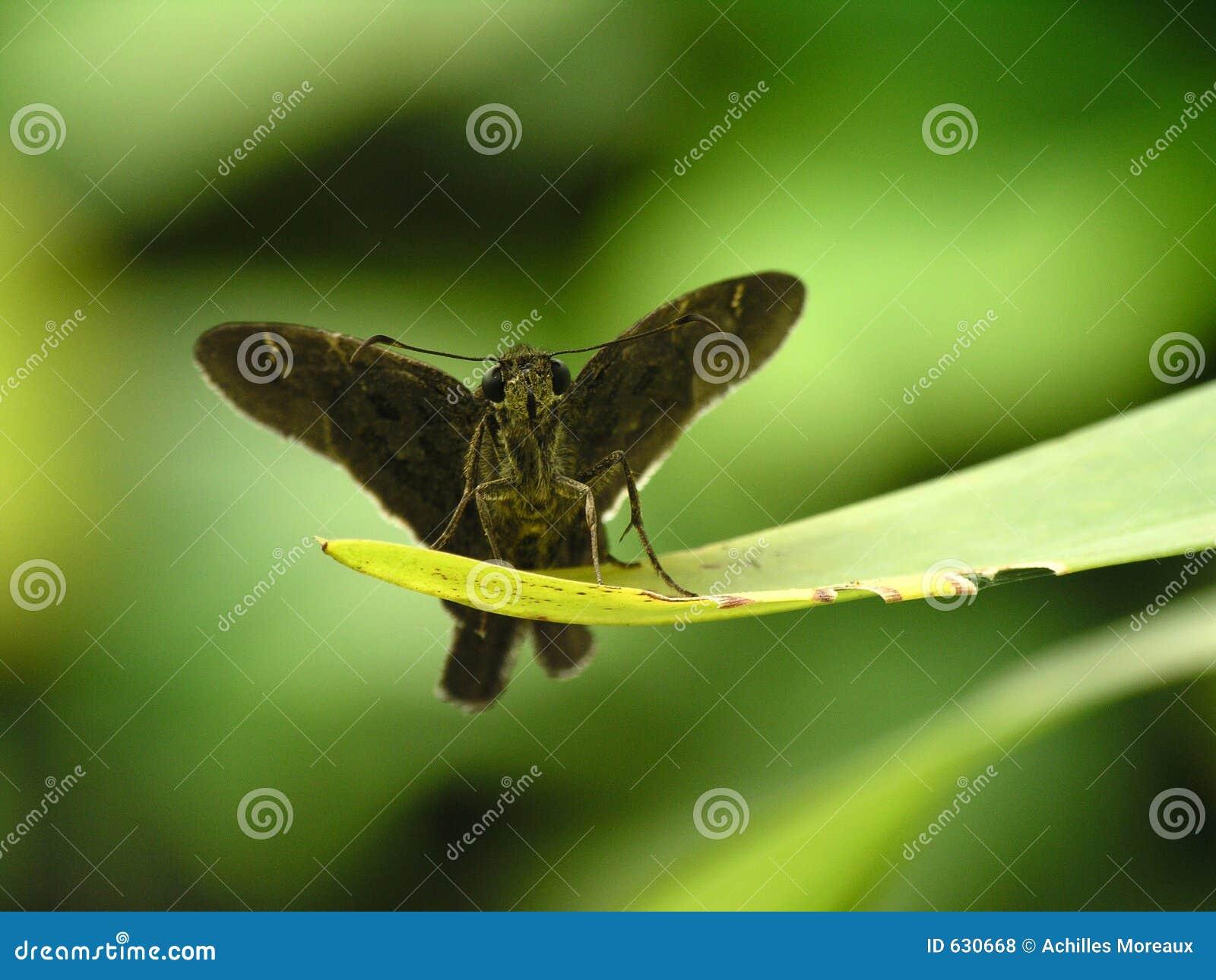 Download коричневый отдыхать сумеречницы листьев Стоковое Фото - изображение насчитывающей природа, отдыхать: 630668