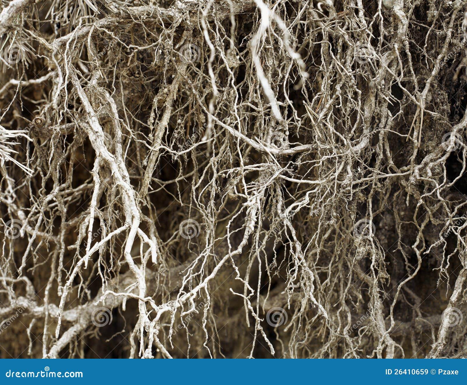 Корни без почвы