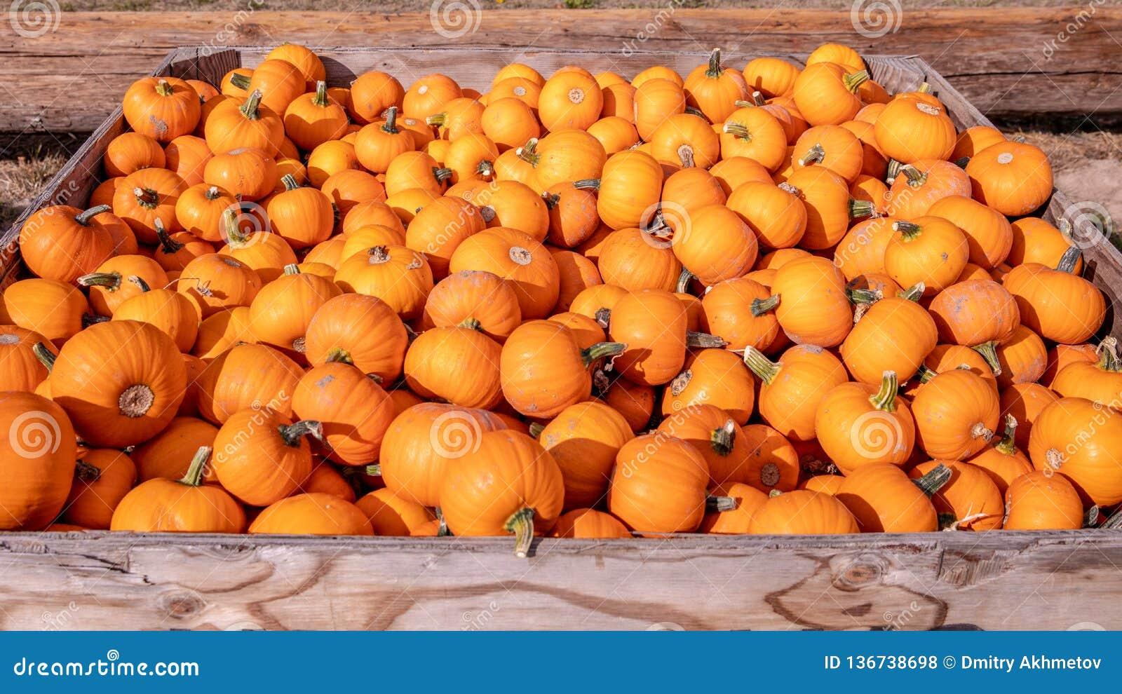 Коробка вполне маленьких оранжевых тыкв на рынке фермеров