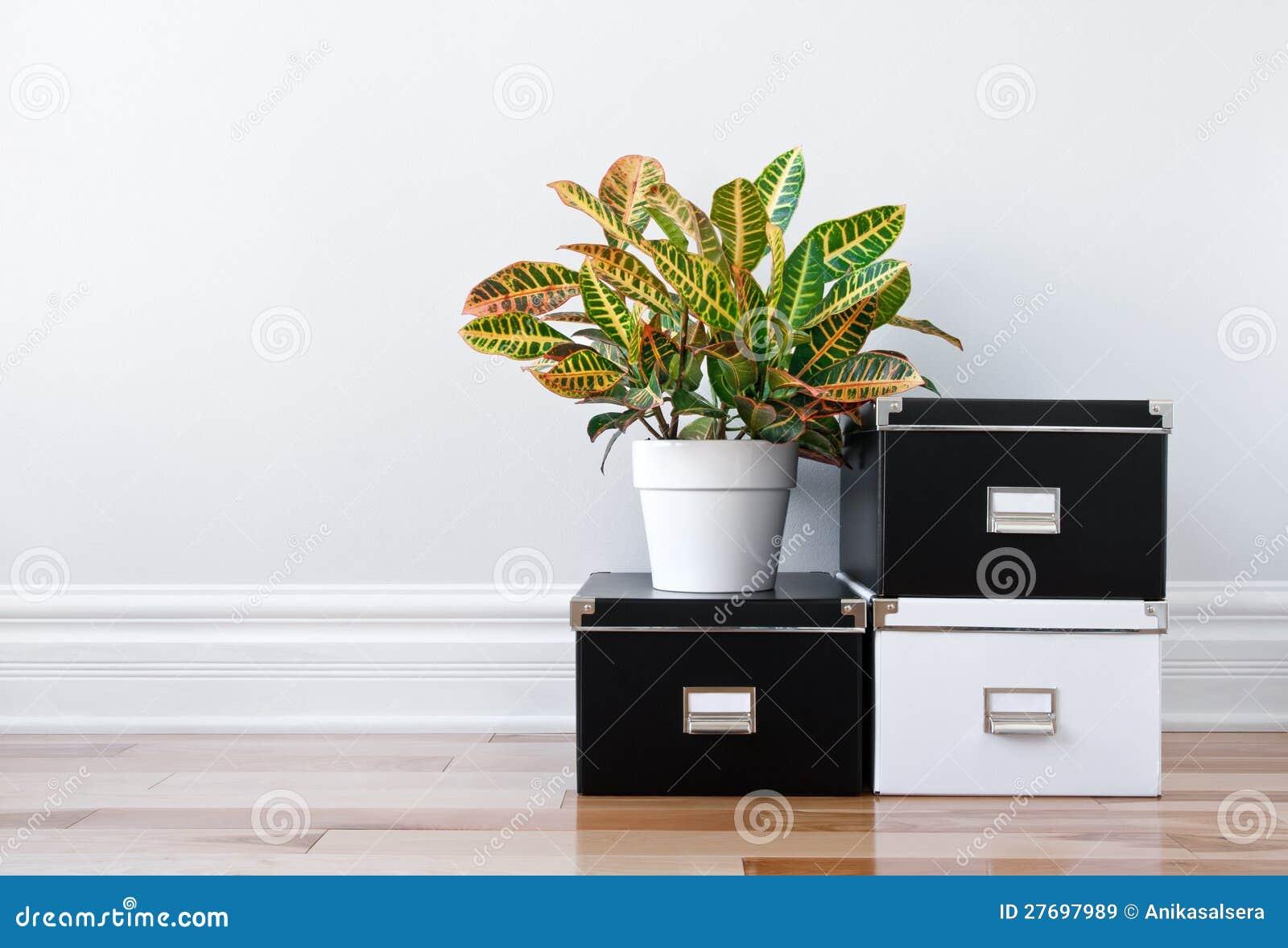 Коробки хранения и зеленый завод в комнате