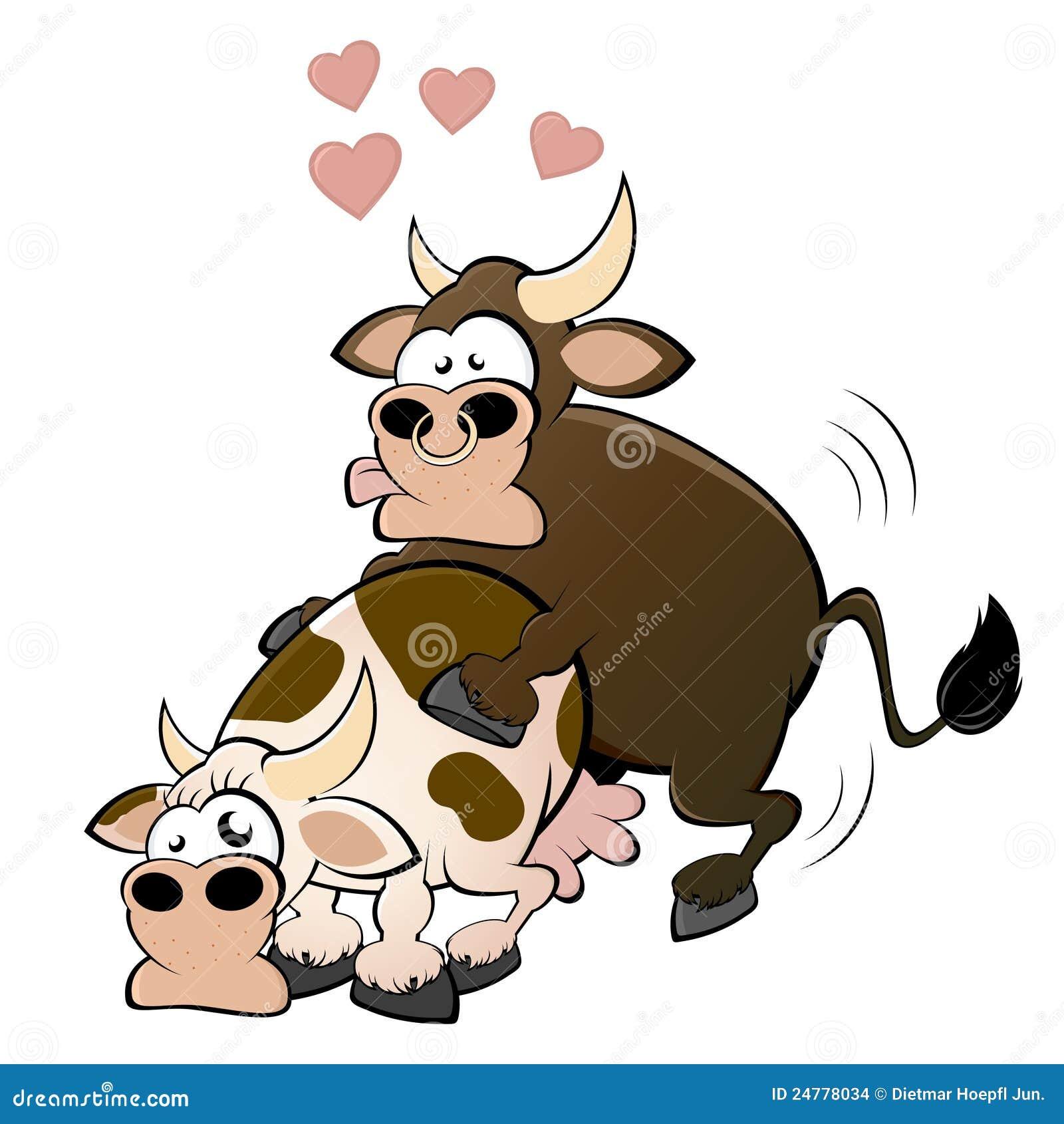Секс быка с коровой смотреть