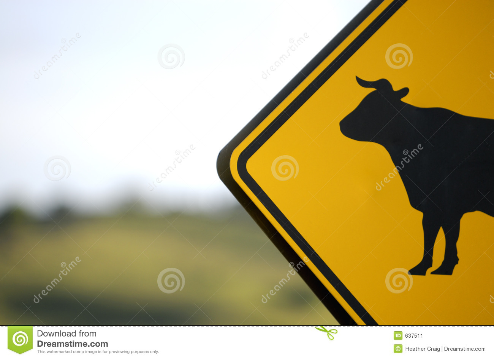 Download корова быка отсутствие знака Стоковое Изображение - изображение насчитывающей angoras, ферма: 637511