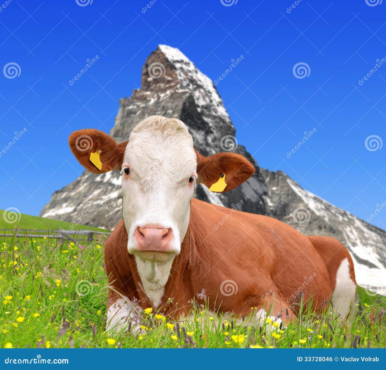 Корова в лужке