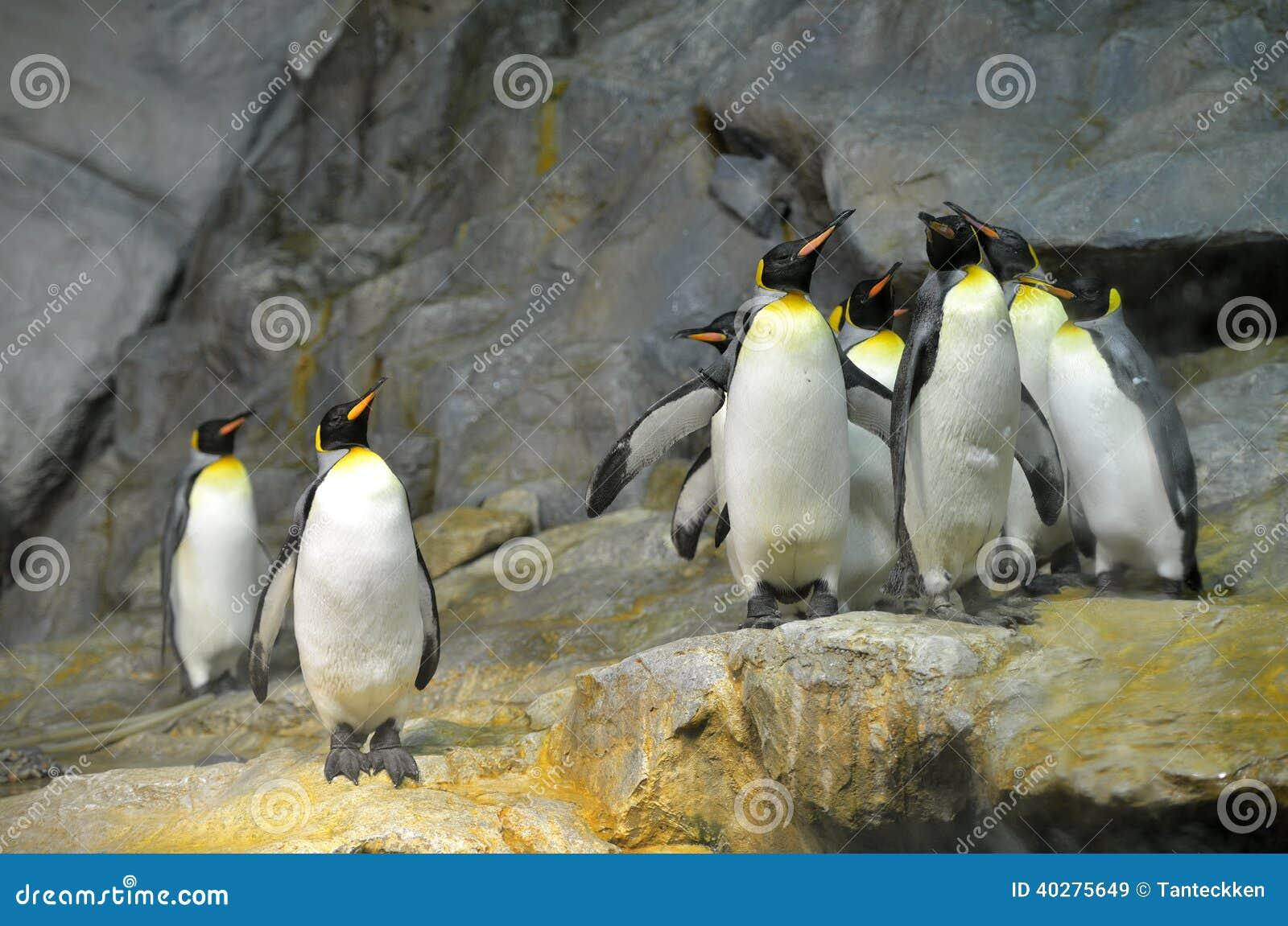 Король пингвины