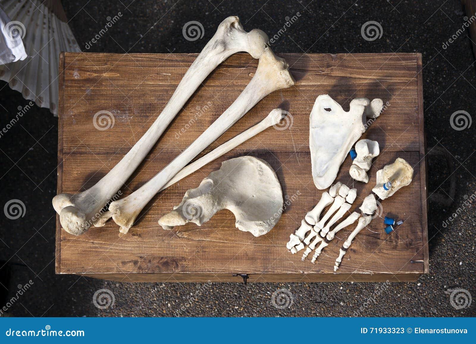 Косточки и череп неизвестного животного