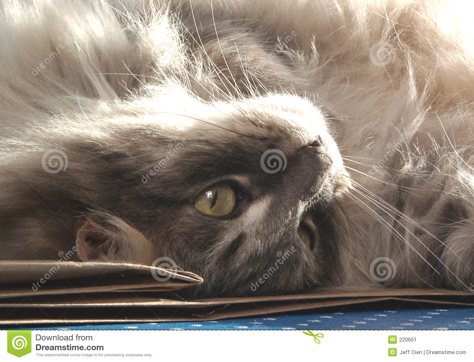 кота внешняя сторона вниз