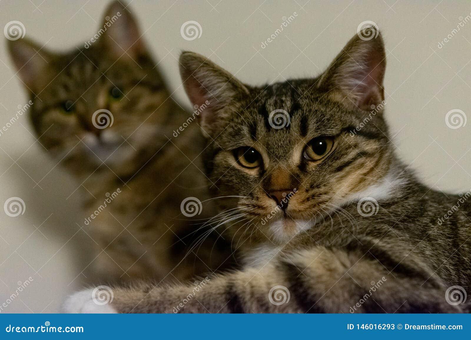 2 кота вытаращить на камере