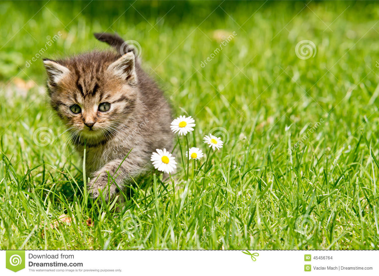 natural remedy cat urine smell