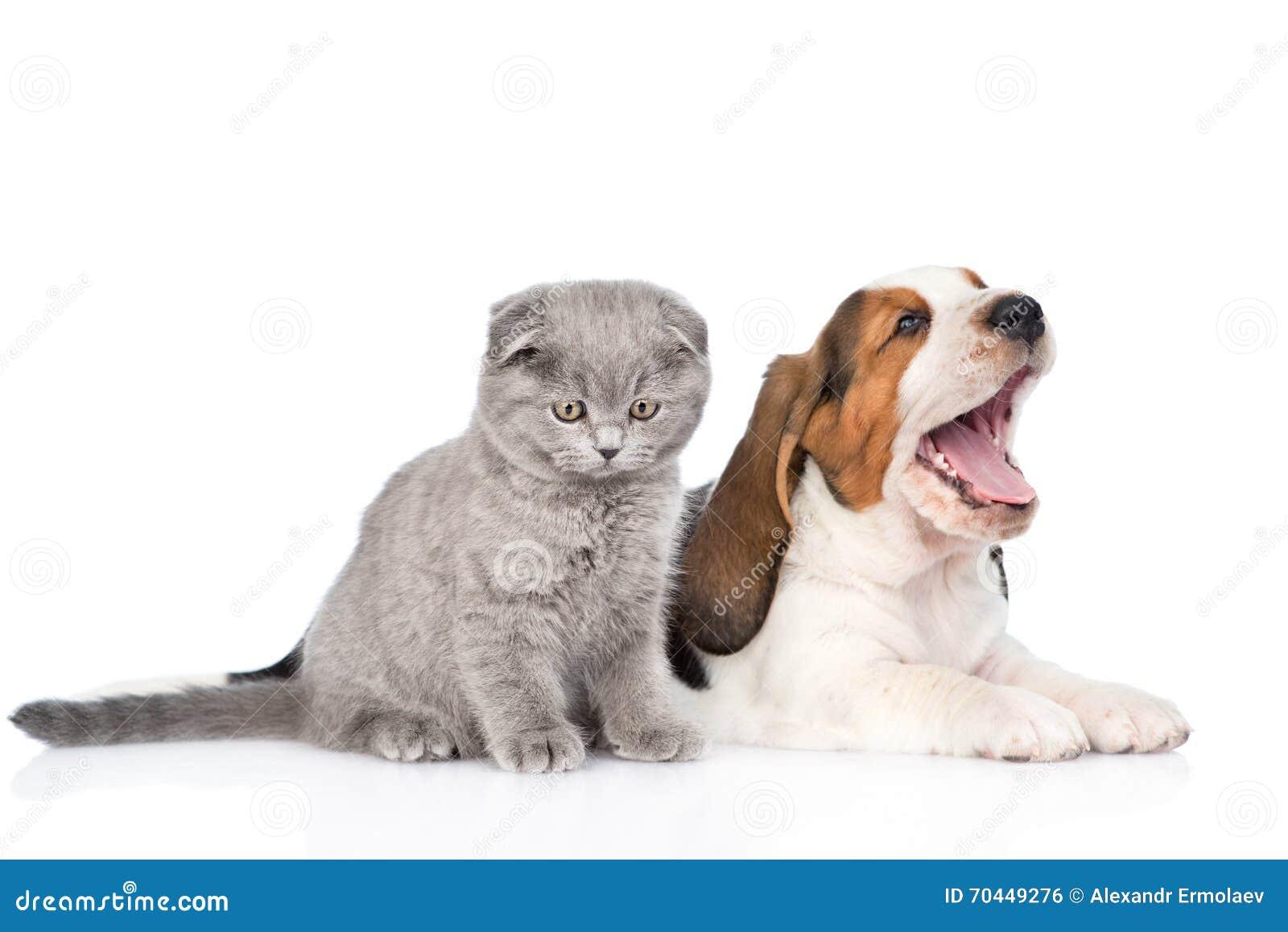 Котенок и зевая щенок гончей выхода пластов совместно ...