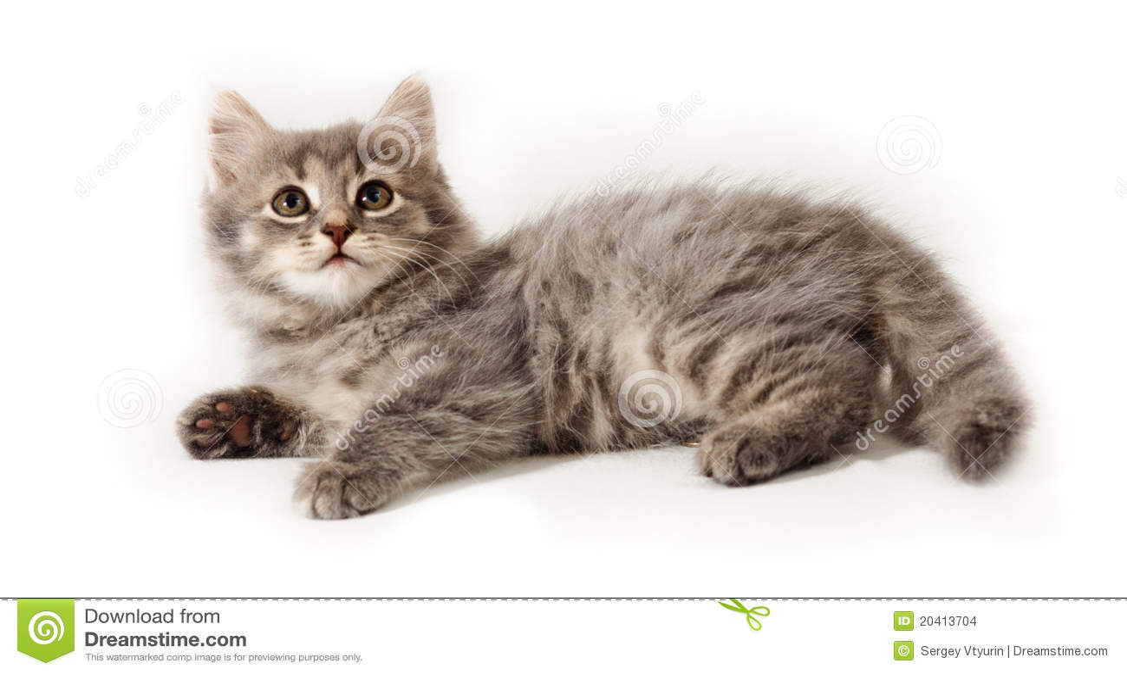 котенок немногая белое