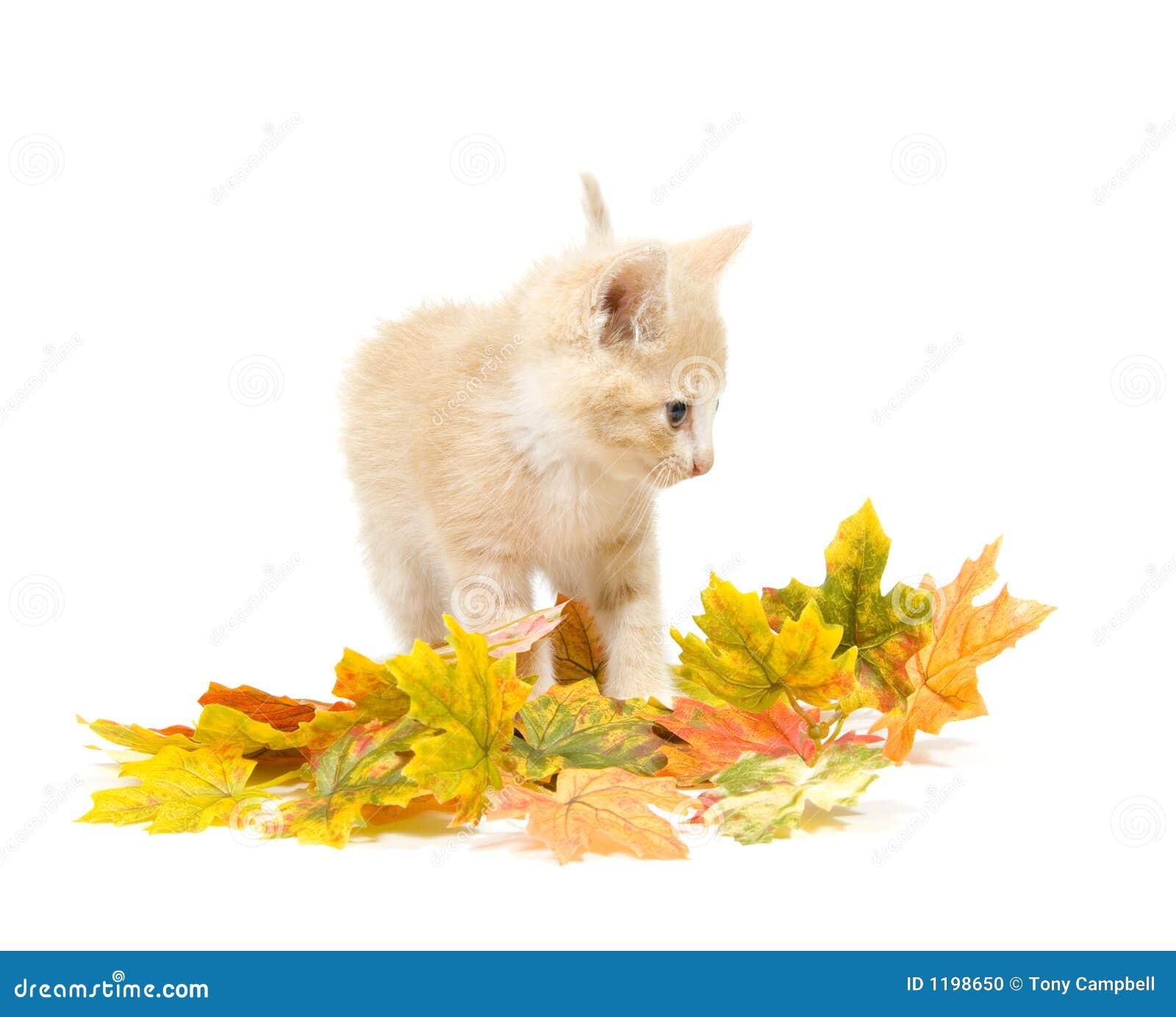 котенок падения покидает желтый цвет
