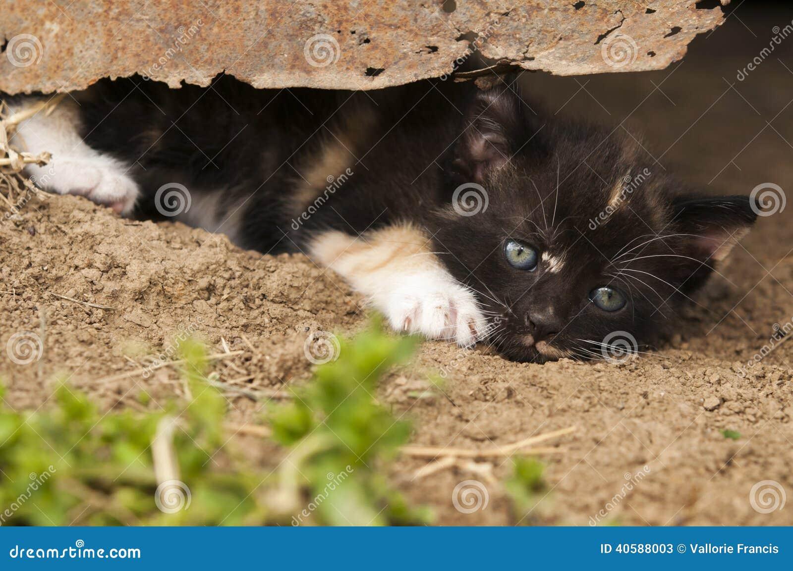 Котенок под ржавым оловом