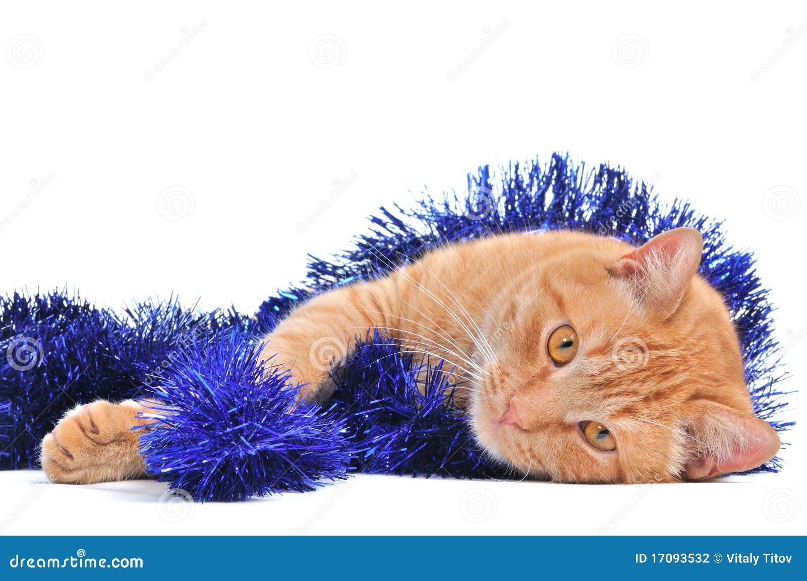 котенок рождества симпатичный