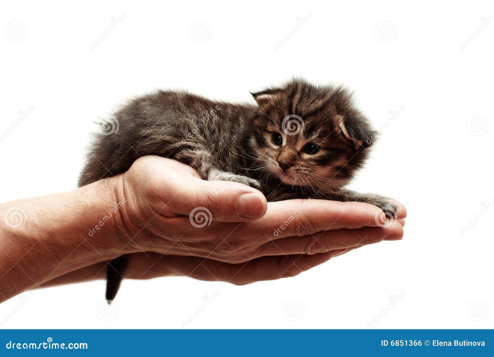 котенок руки малый
