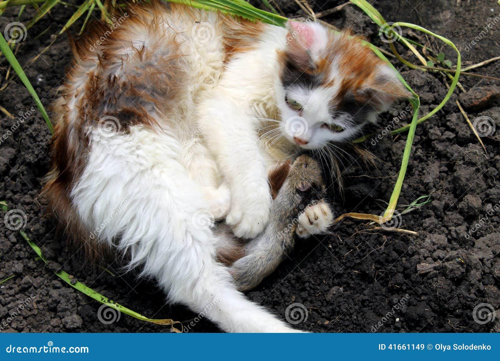 Котенок с мышью