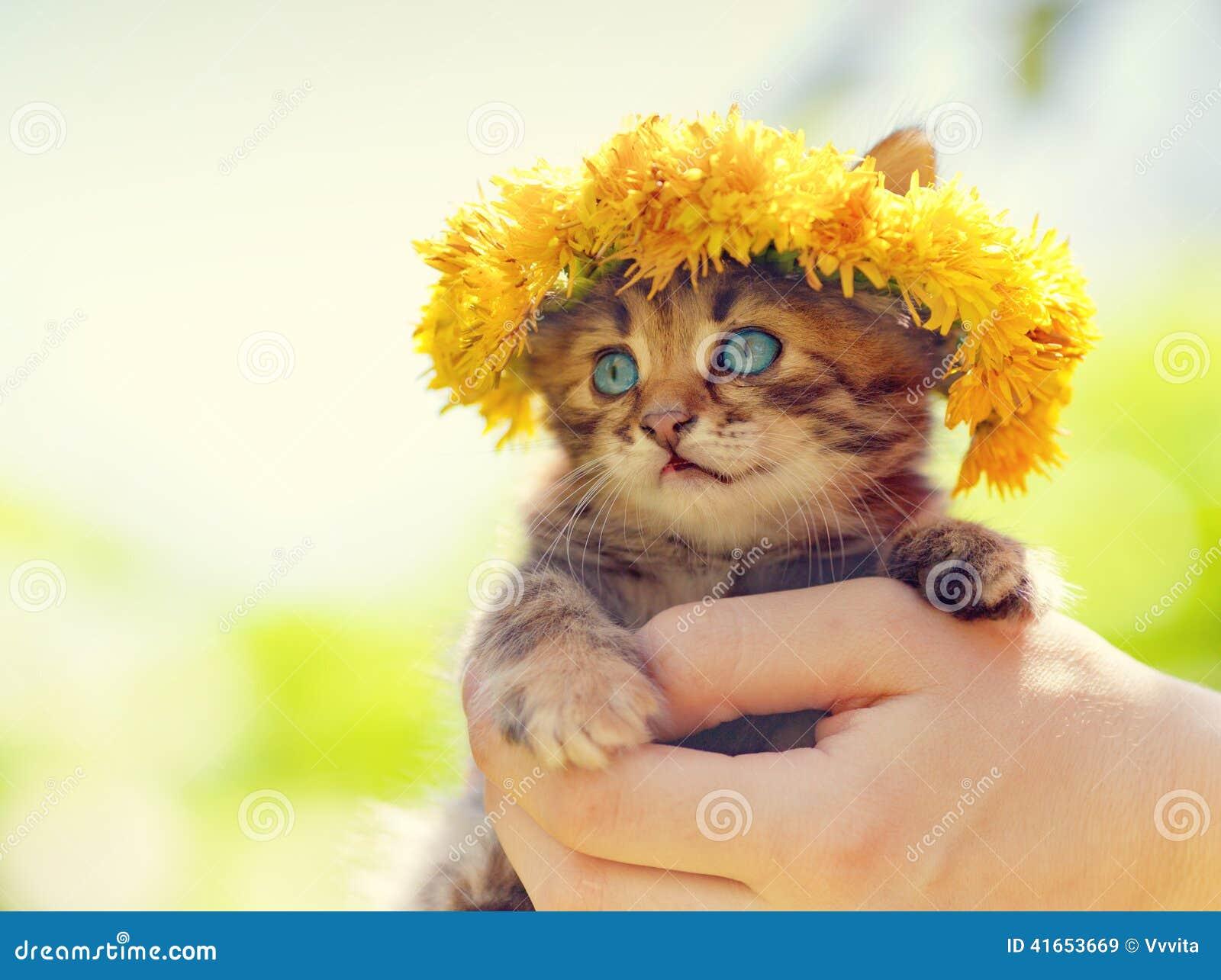 Котенок увенчанный с chaplet одуванчика