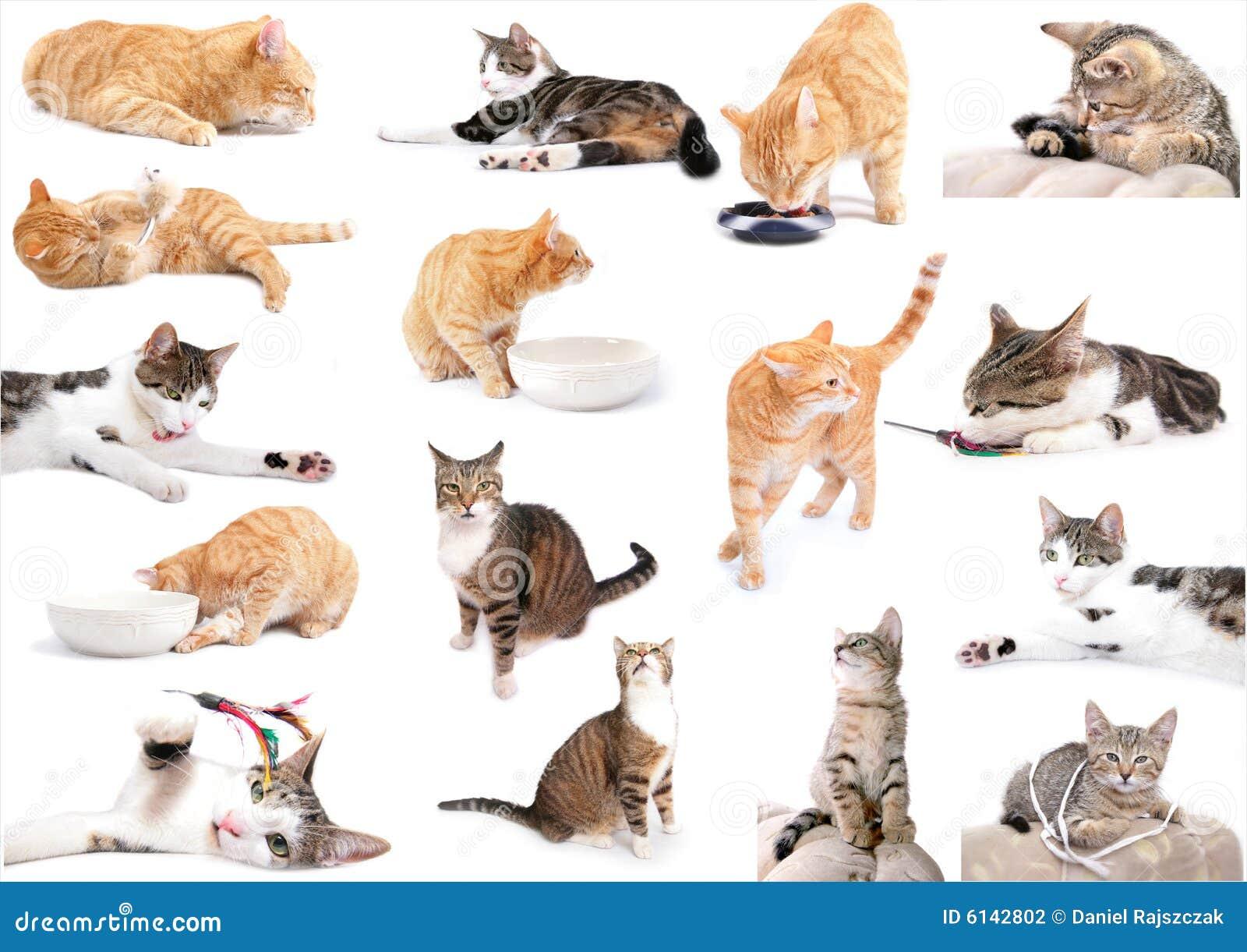 коты вполне