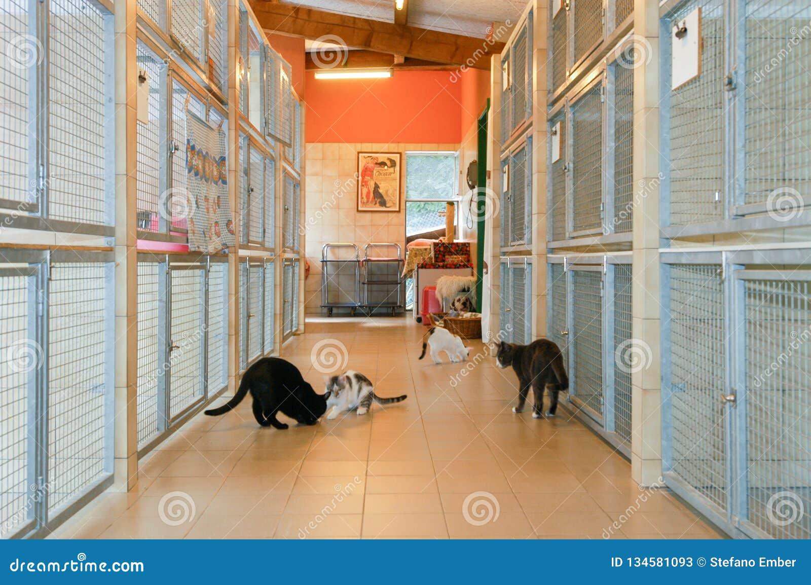 Коты на приюте для животных Лугано на Швейцарии