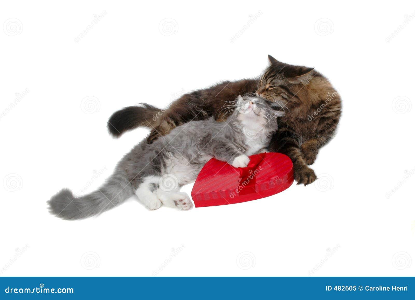 коты романтичные