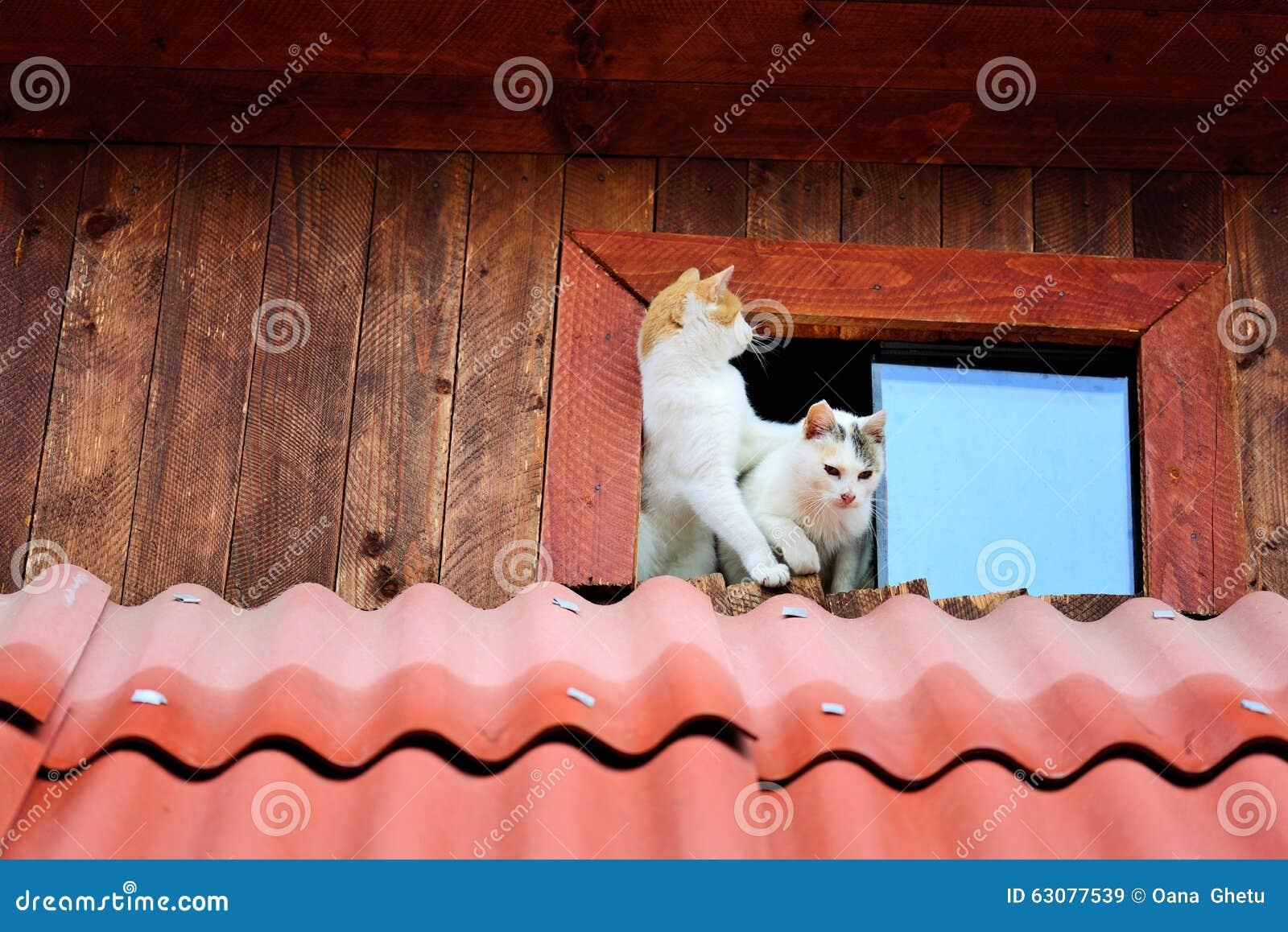 коты смешные