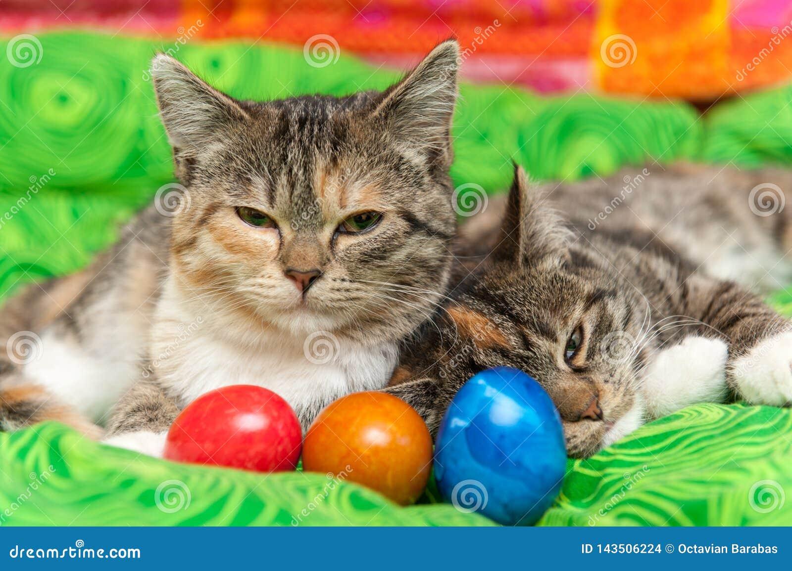 Коты с красочными пасхальными яйцами