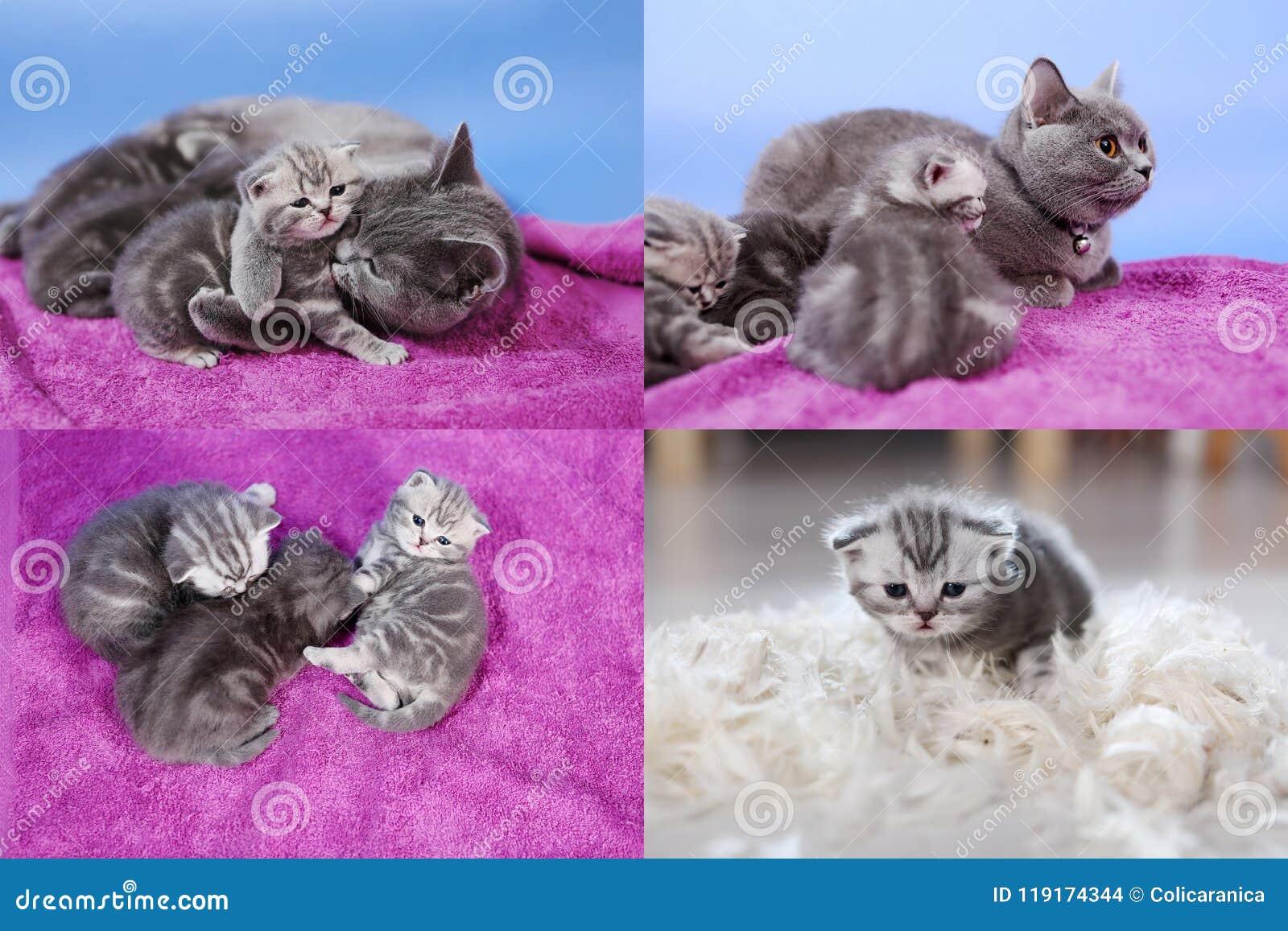 Котята младенца играя на mauve предпосылке, multicam