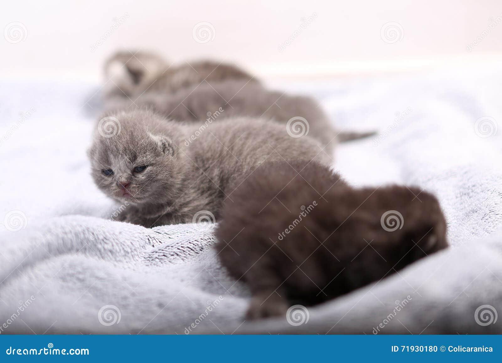 Котята новорожденного, первый день жизни