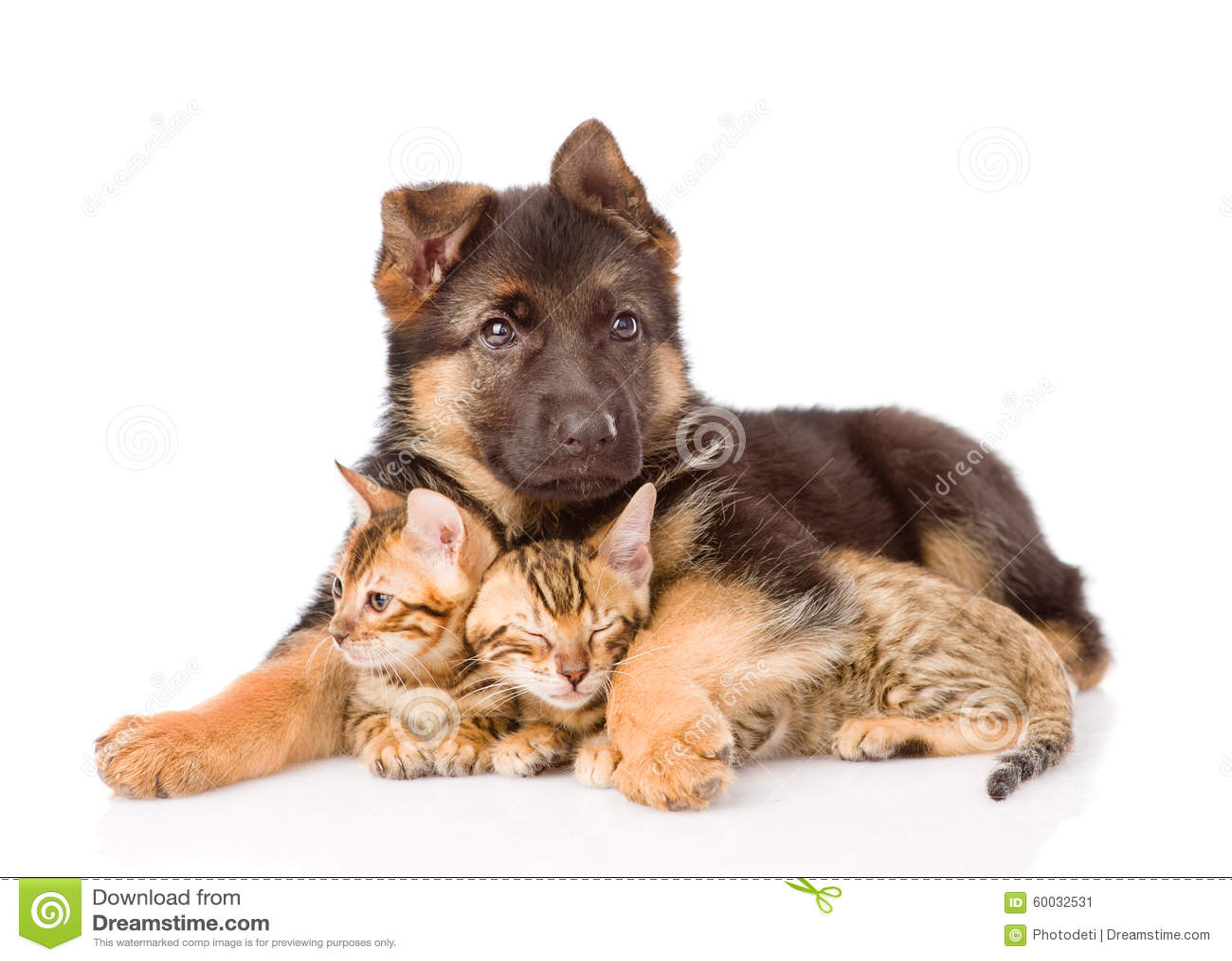 Котята обнимать собаки щенка маленькие белизна изолированная предпосылкой