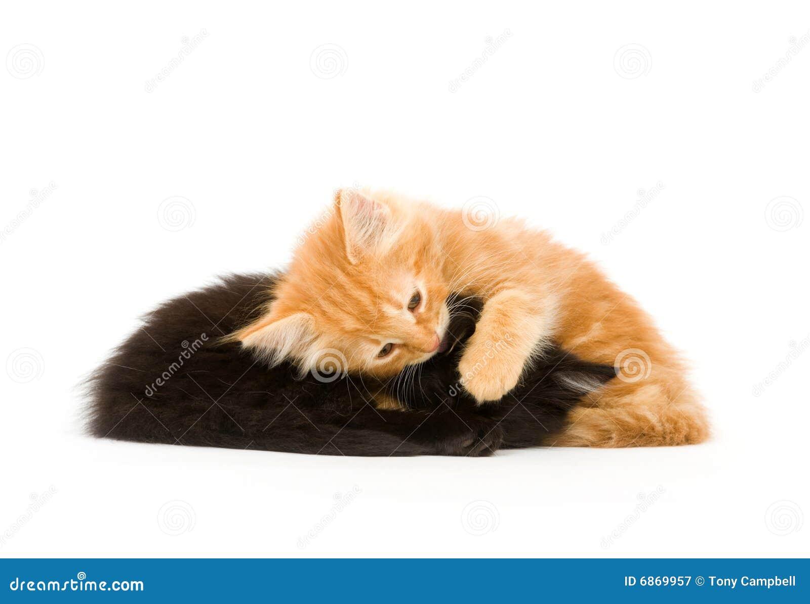 котята утомляли 2