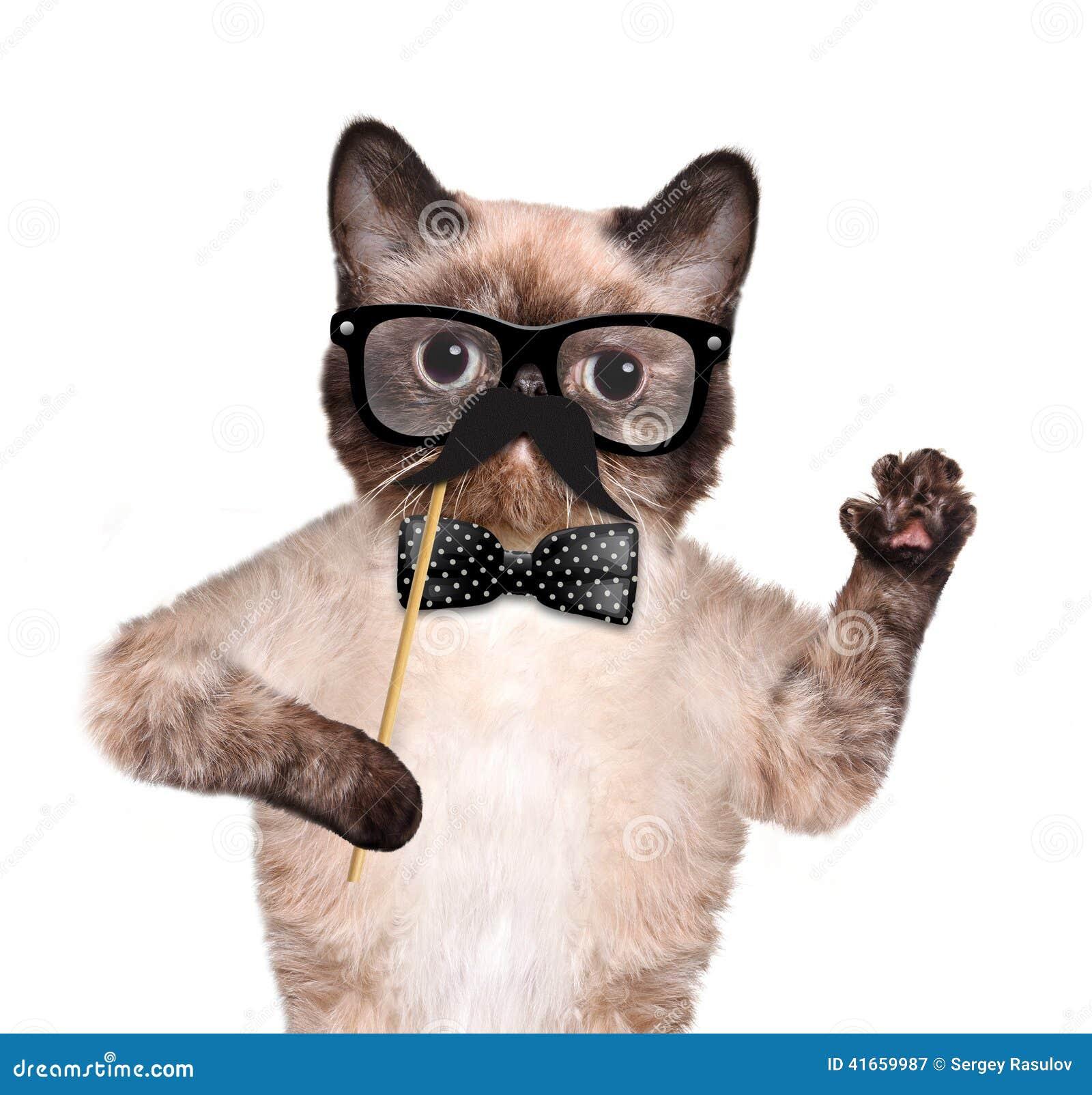 Кот битника
