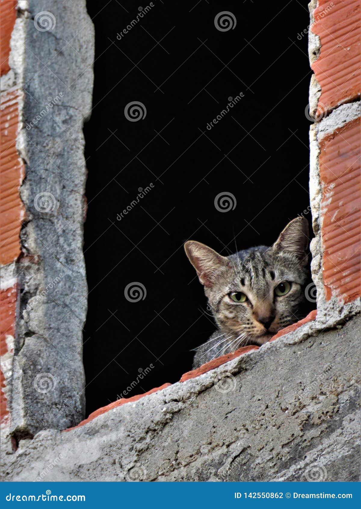 Кот в окне дома под конструкцией