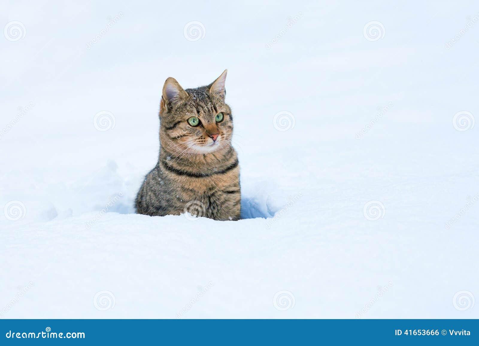 Кот в снеге
