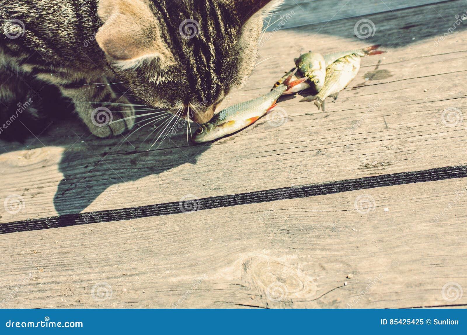 Кот ест свежих рыб на пристани