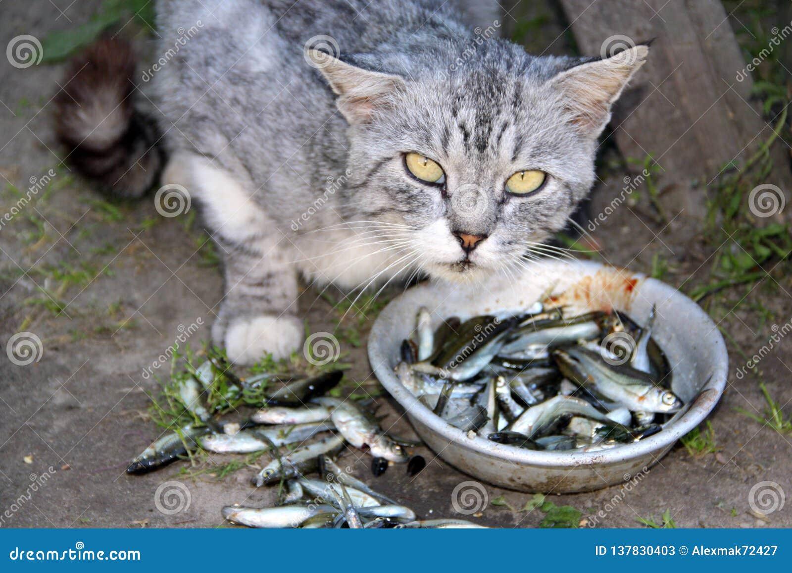 Молчание сёмги, возмущение кота )) | Пикабу | 1155x1600