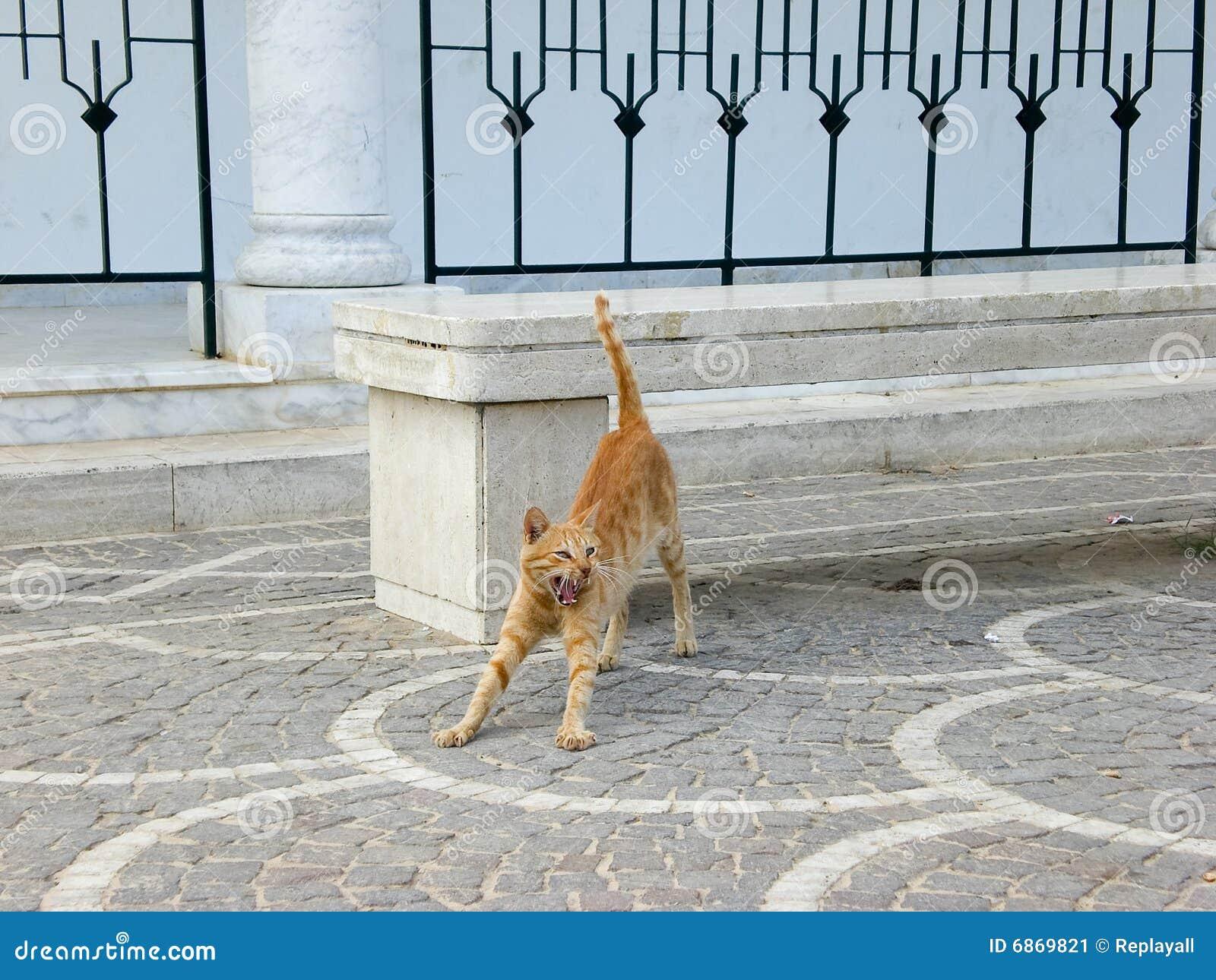 кот зевая