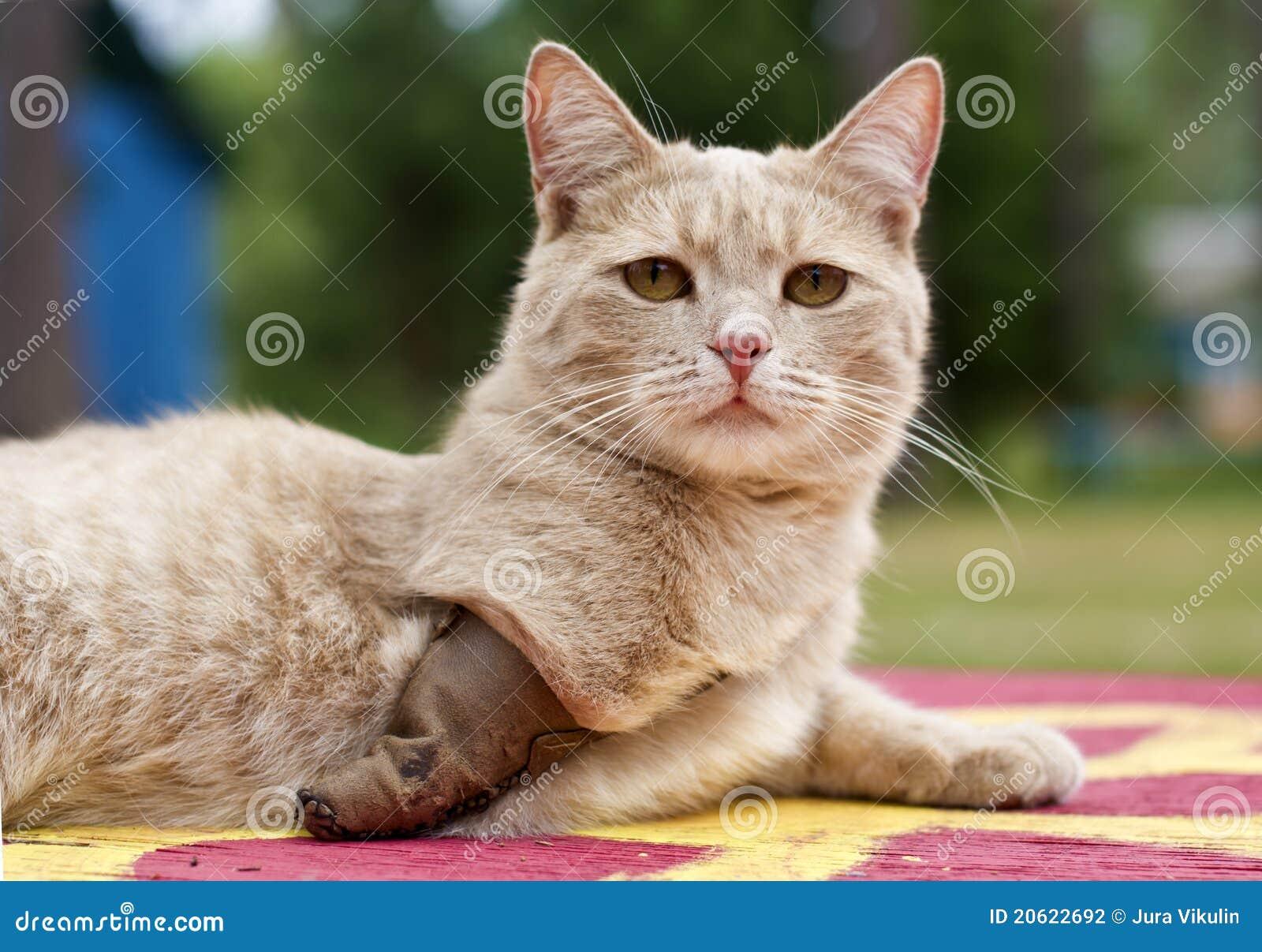 кот инвалидный