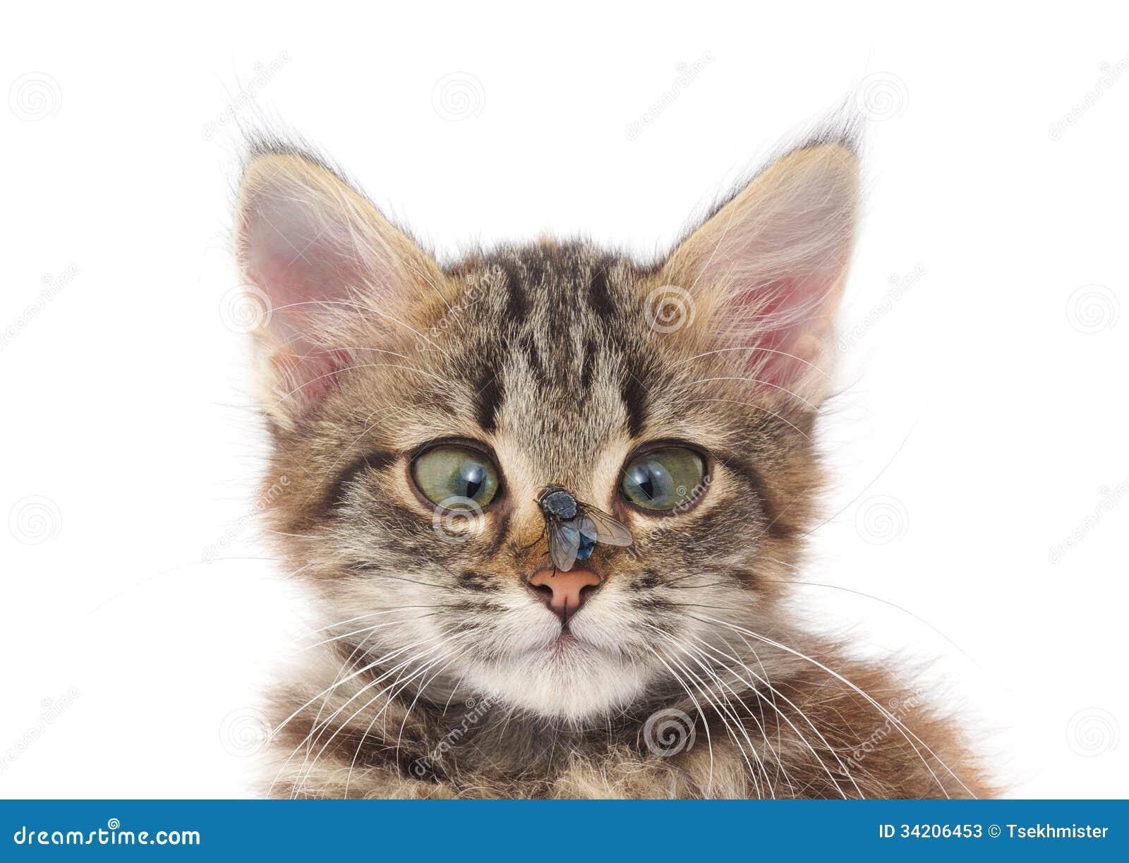 Фото кота с мухой