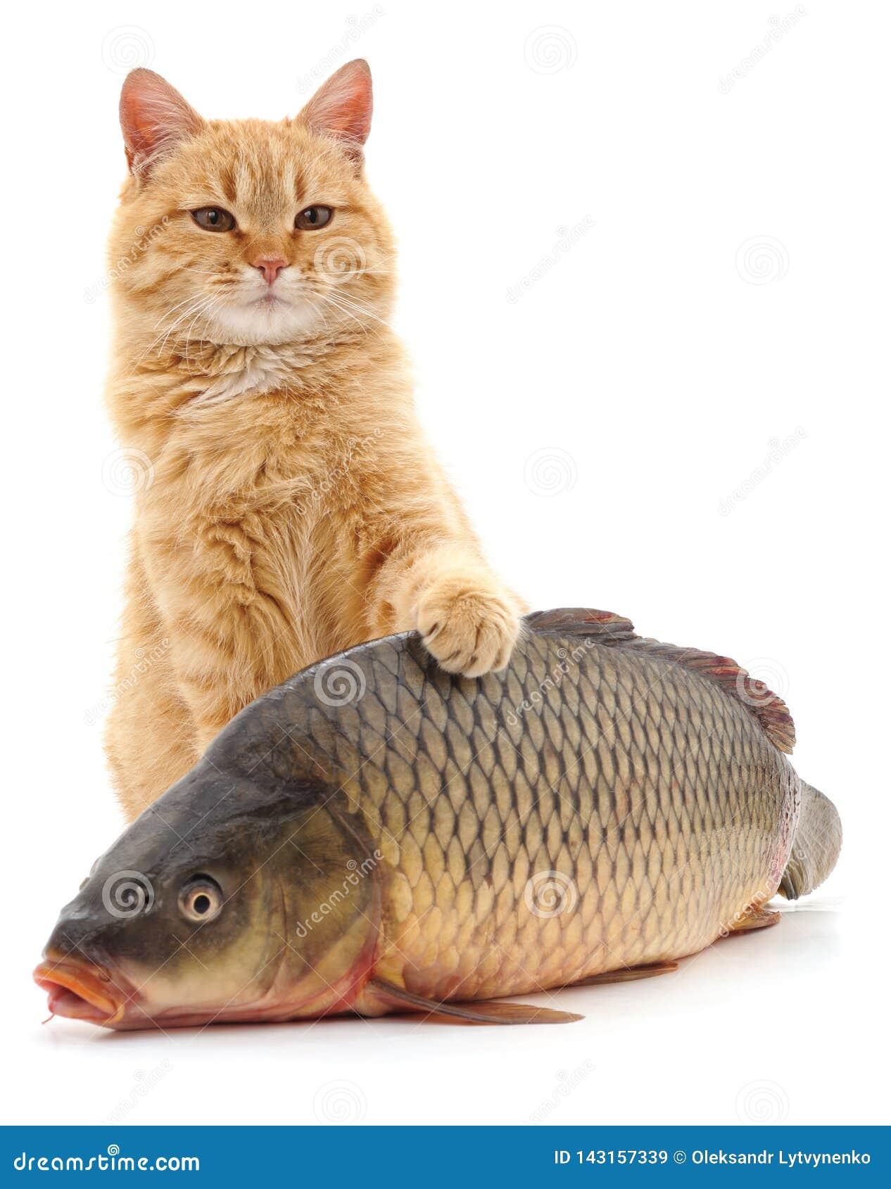 кот и рыбы стоковое изображение. изображение насчитывающей избежание -  143157339