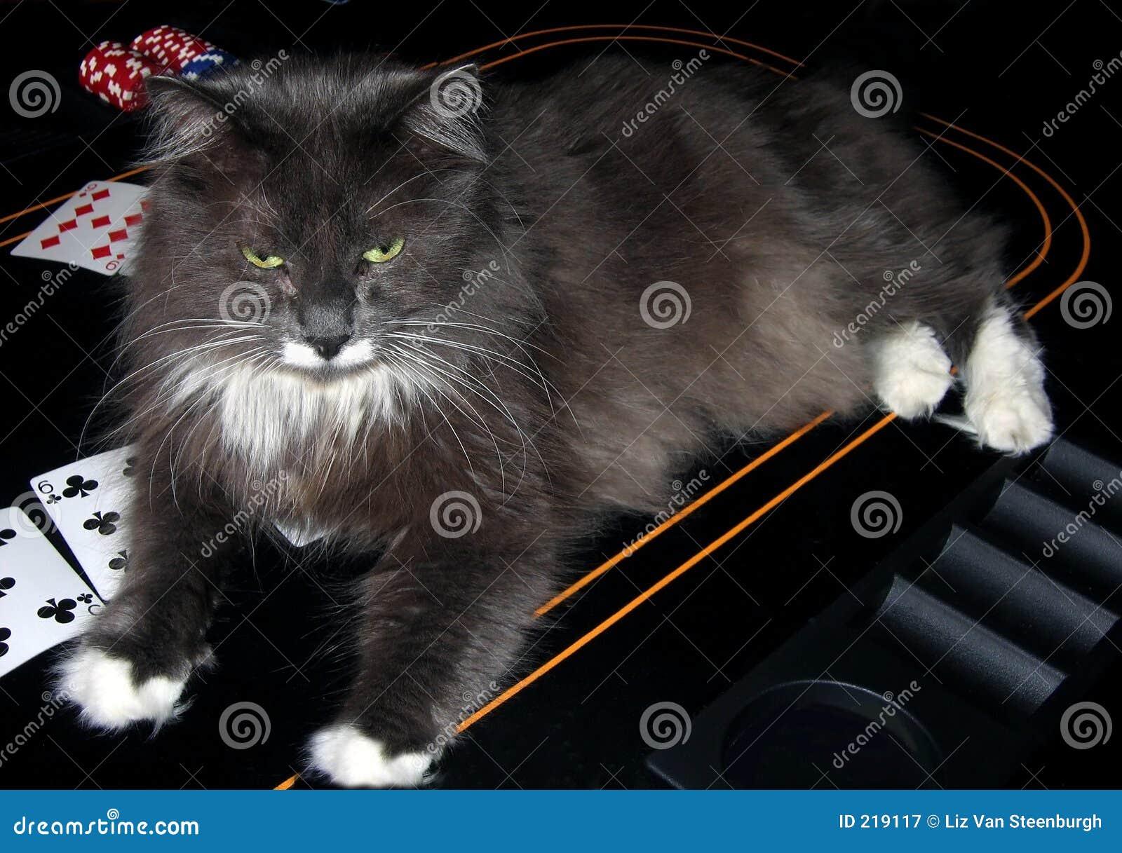 кот в казино
