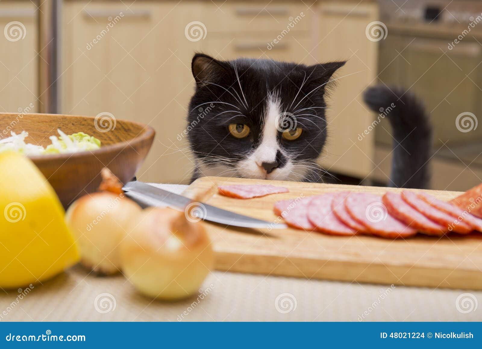 Кот и сосиска скачать