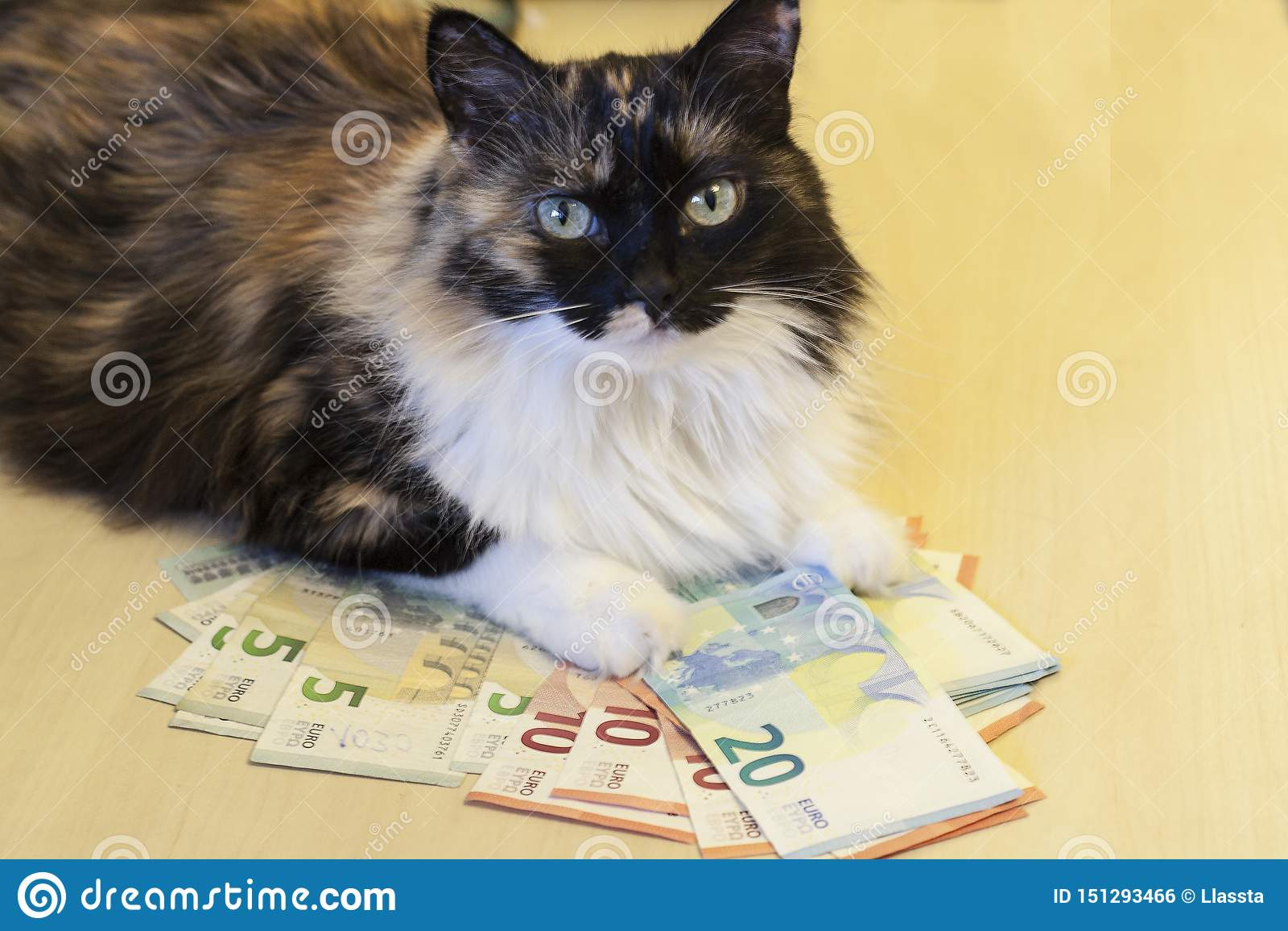 Кот лежит на деньгах