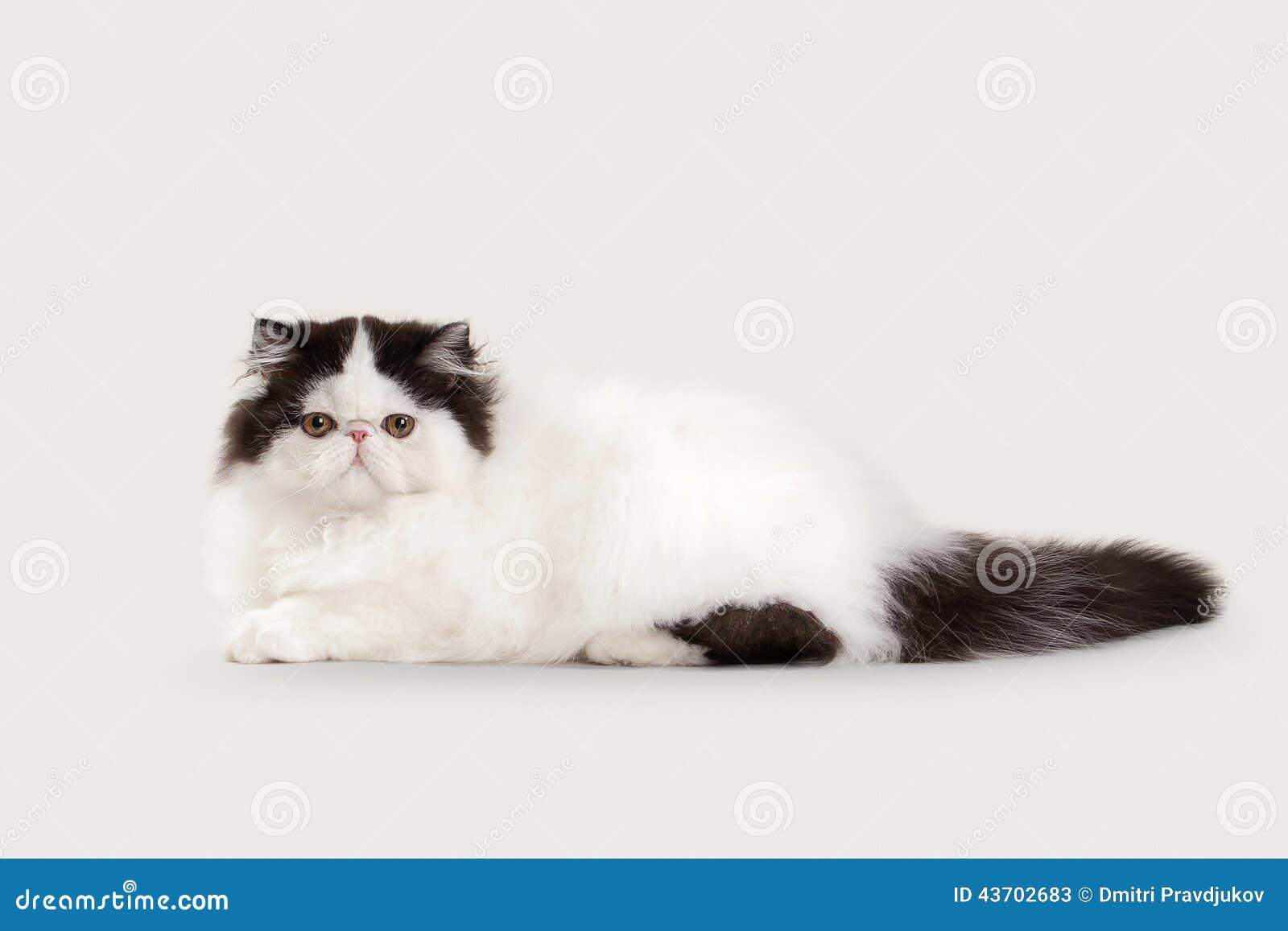Кот ма