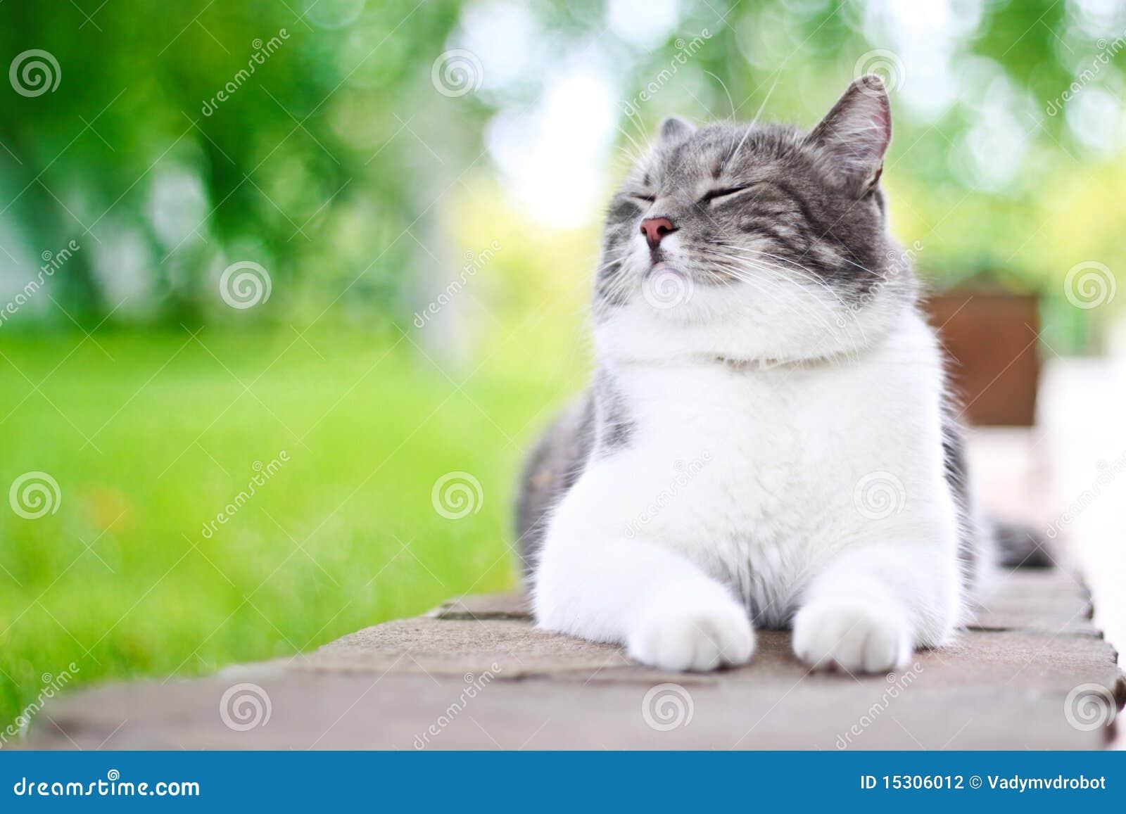кот милый наслаждающся его жизнью