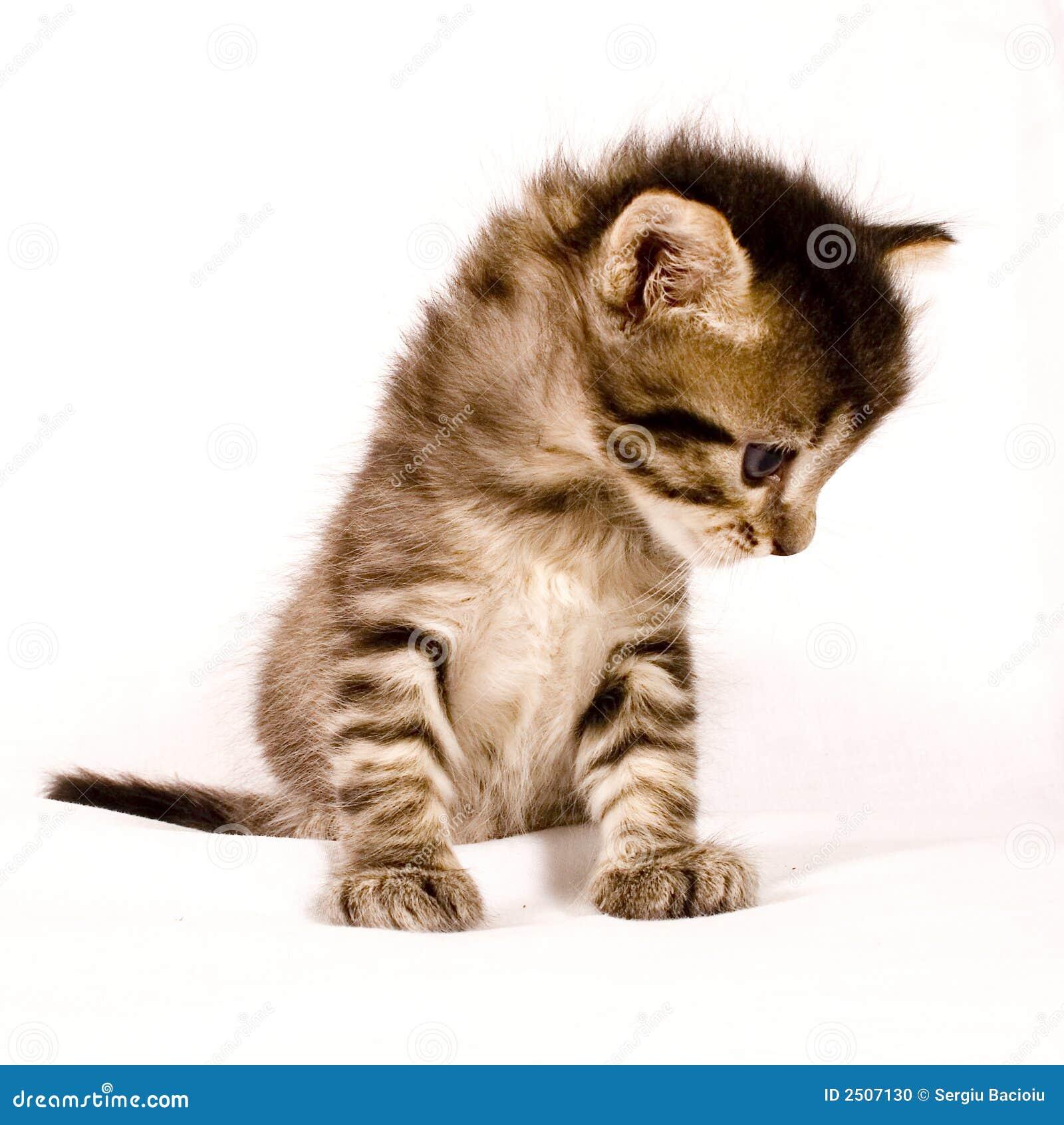 кот милый