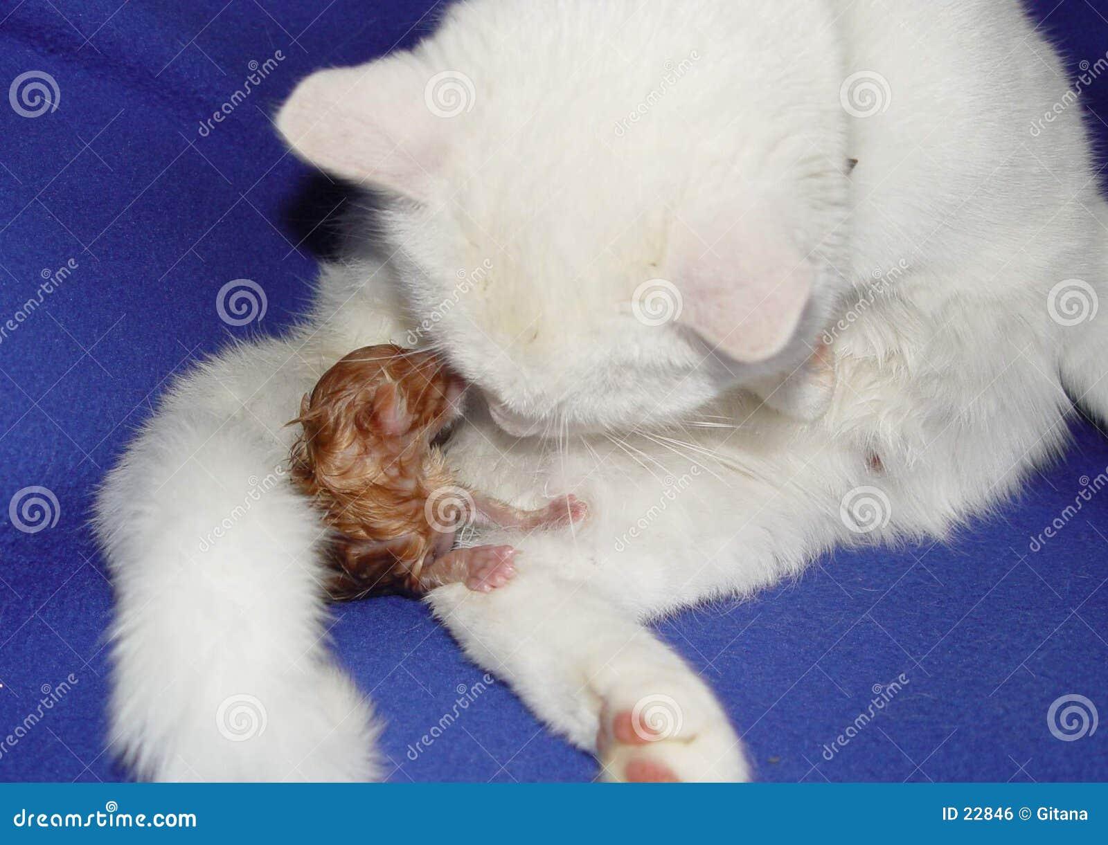 кот младенца получает моим