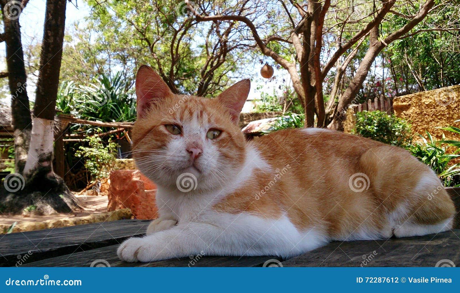 Download Кот на баре пляжа стоковое фото. изображение насчитывающей пришл - 72287612